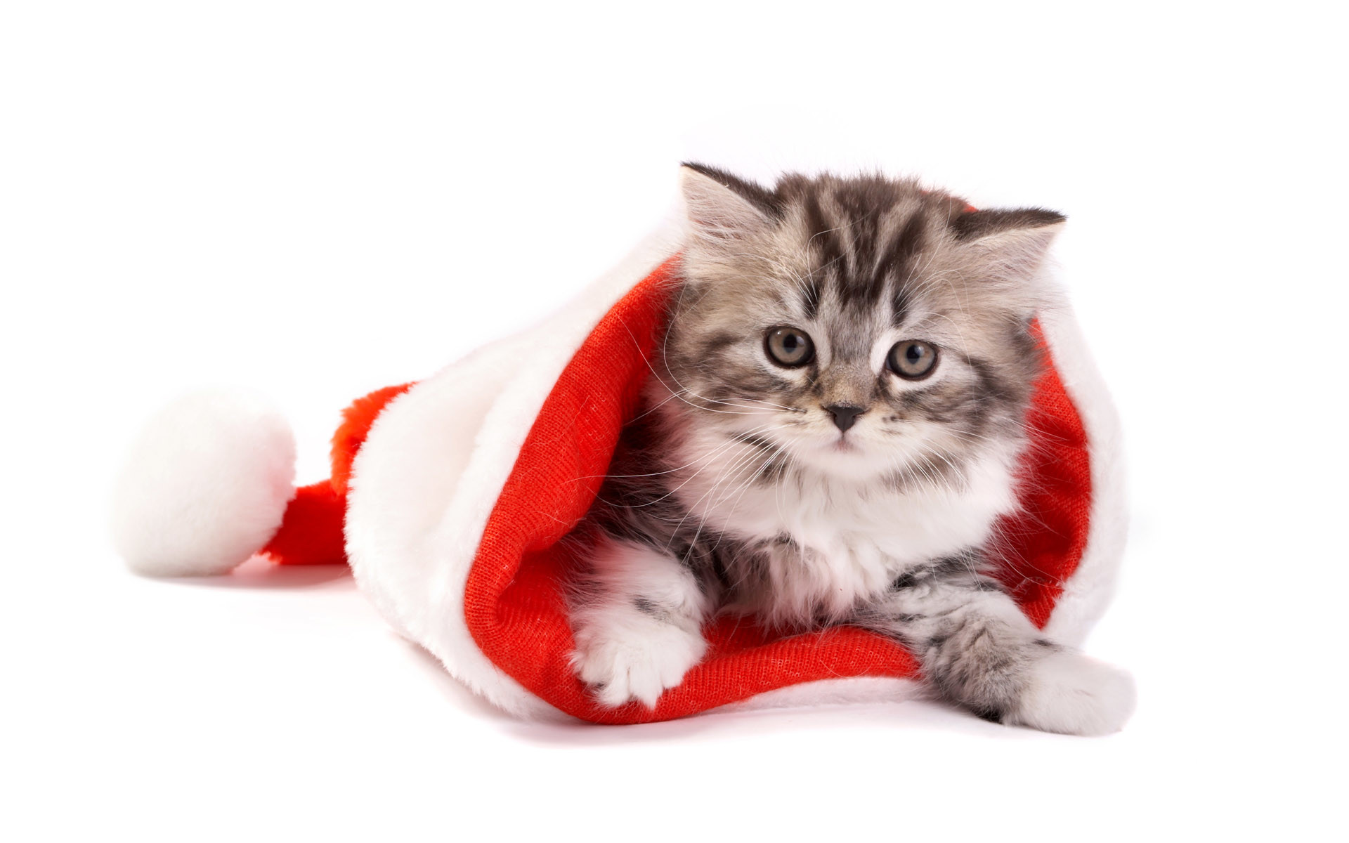 Image result for dog cat christmas