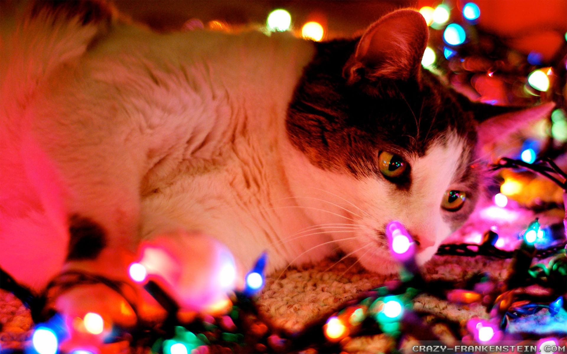 Christmas Lights Photography Tumblr Wallpapers HD