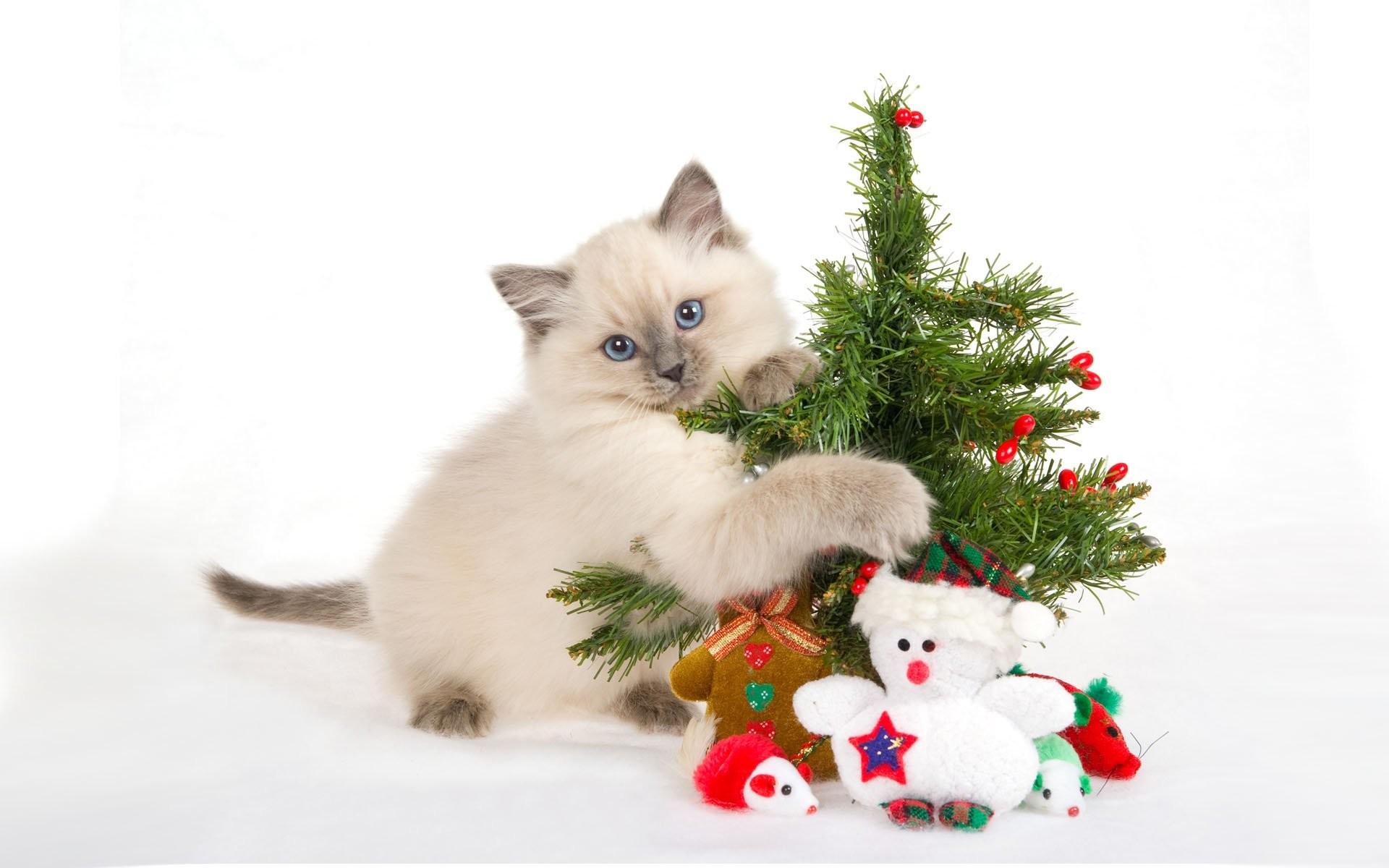 Funny Christmas Cat