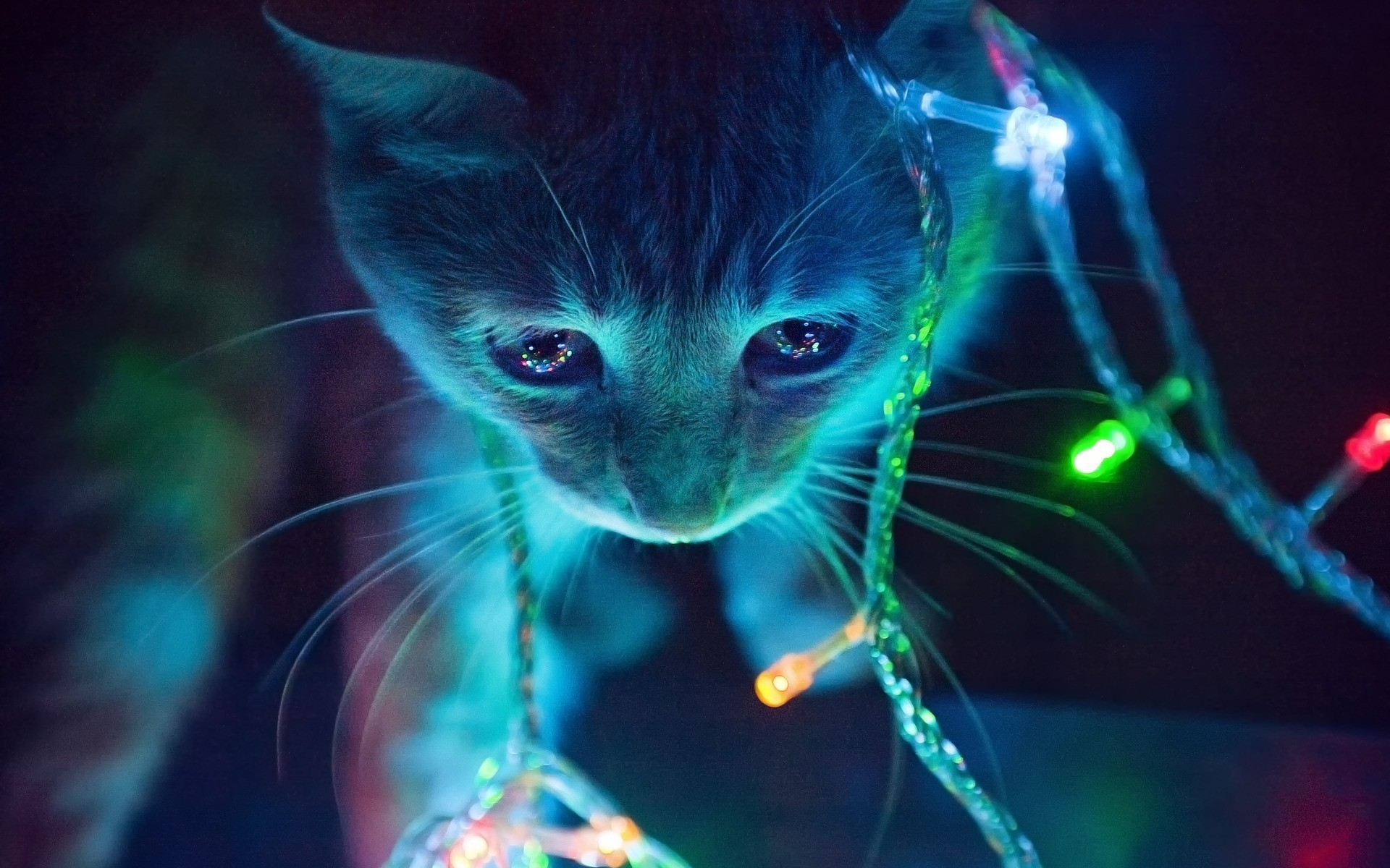 Christmas lights kitten colorful lights kitty cat wallpaper vibrant colors  cute adorable atmospheric atmosphere X-
