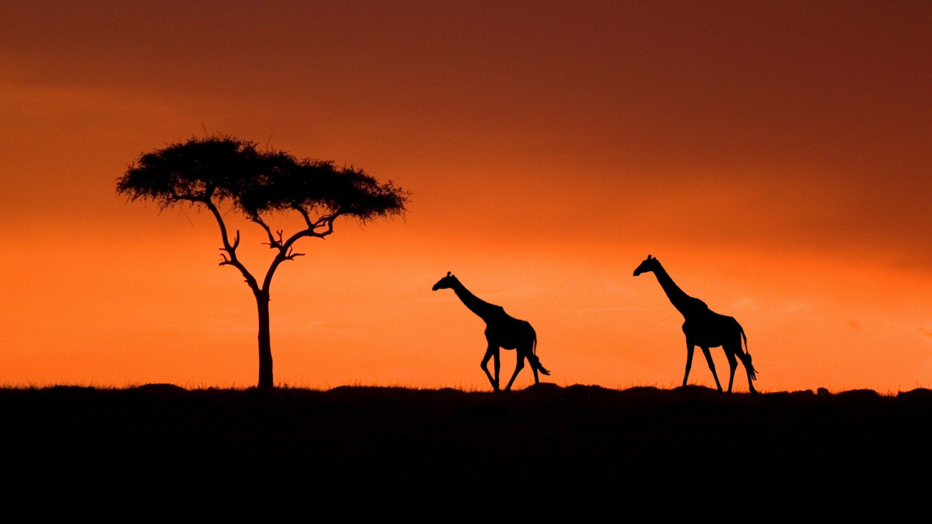 Giraffe Sunset Wallpaper Desktop Background – Wallpaper