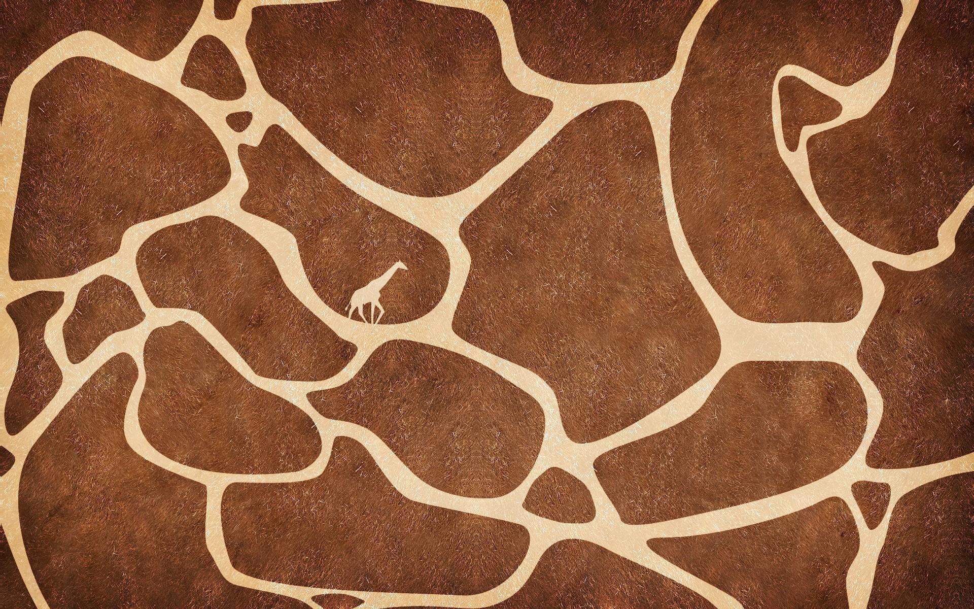 Giraffes images Giraffe Wallpaper HD wallpaper and background photos