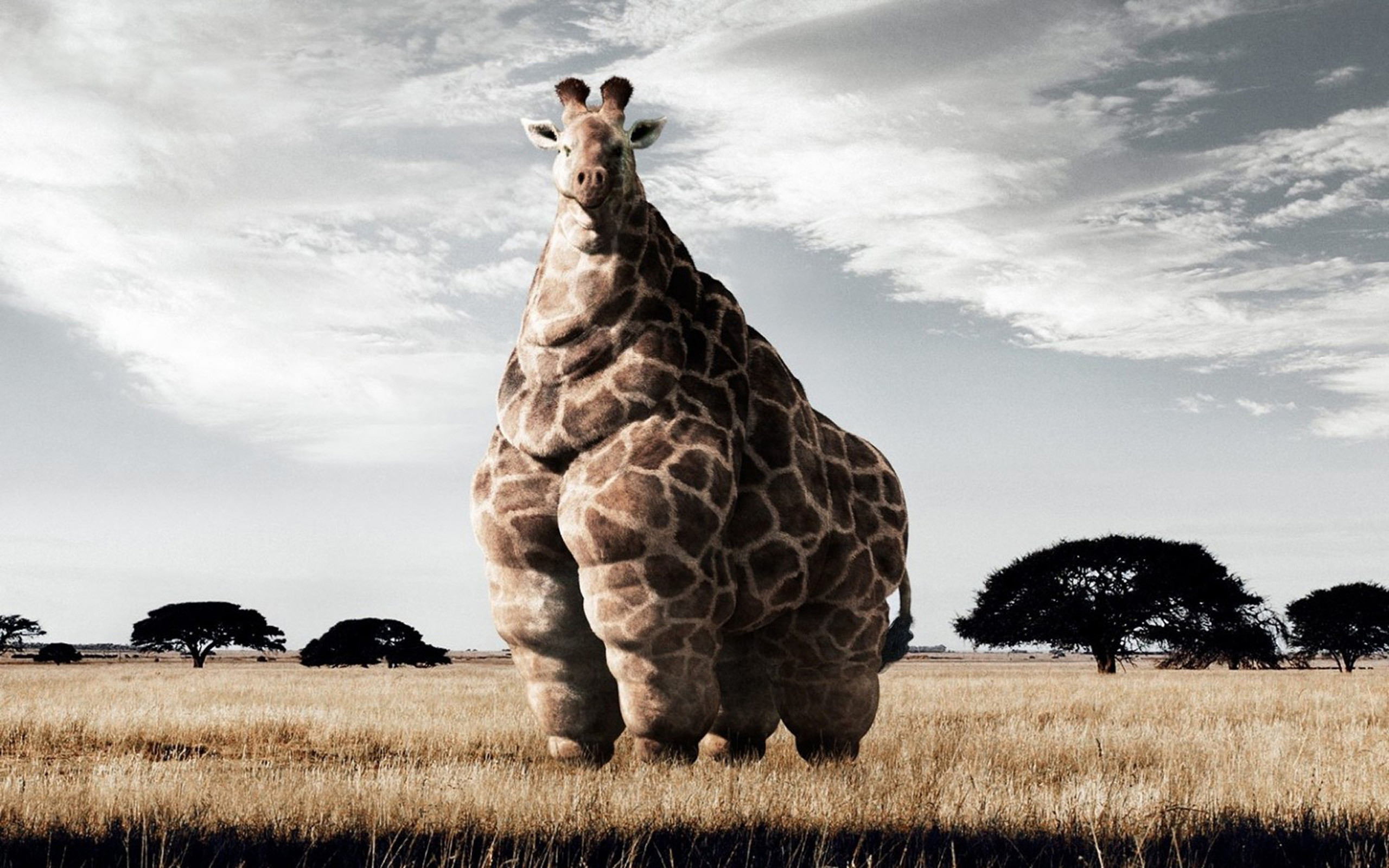 Cute Giraffe Wallpaper High Quality Resolution