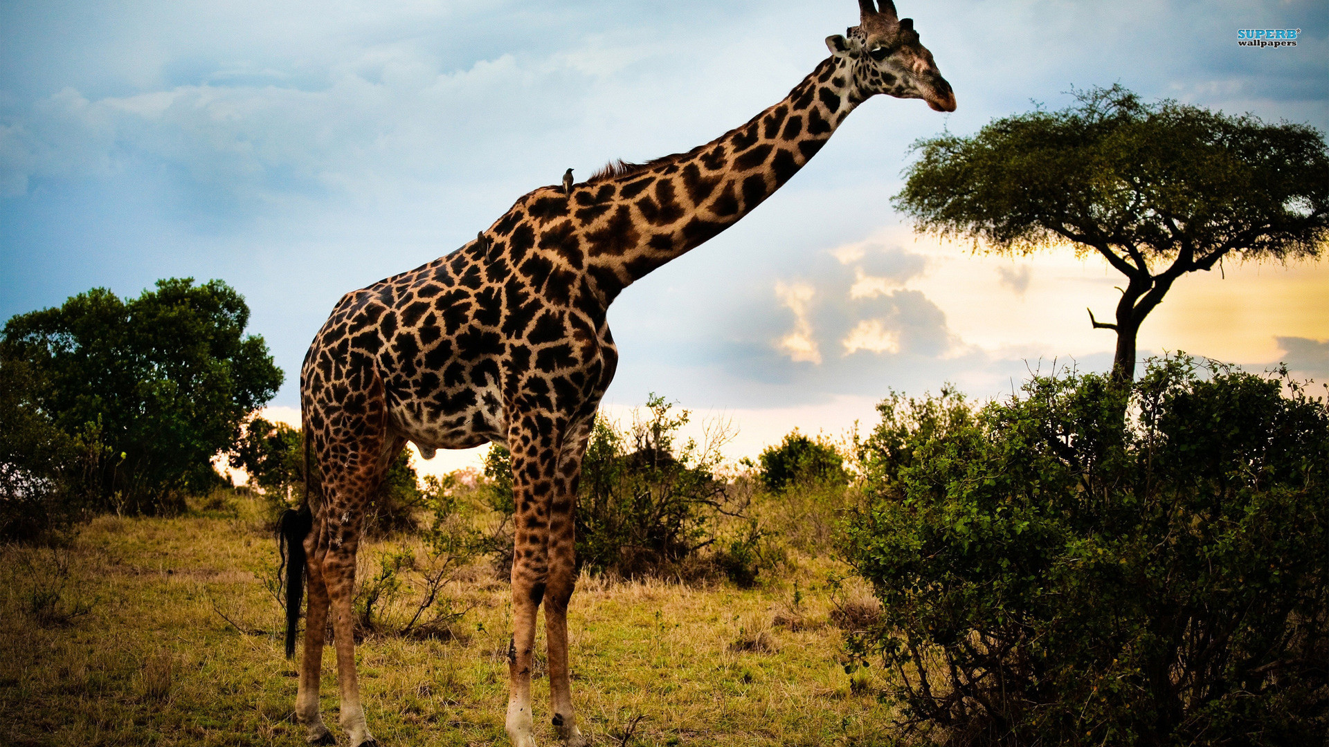 Cute giraffe wallpaper tumblr – photo#19