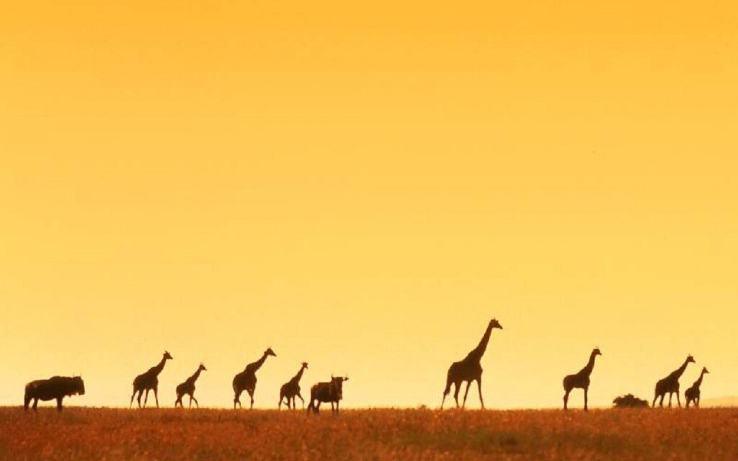 Giraffe Sunset Wallpaper Background with High Definition Wallpaper  Resolution px 126.57 KB Animal Sunset Cute
