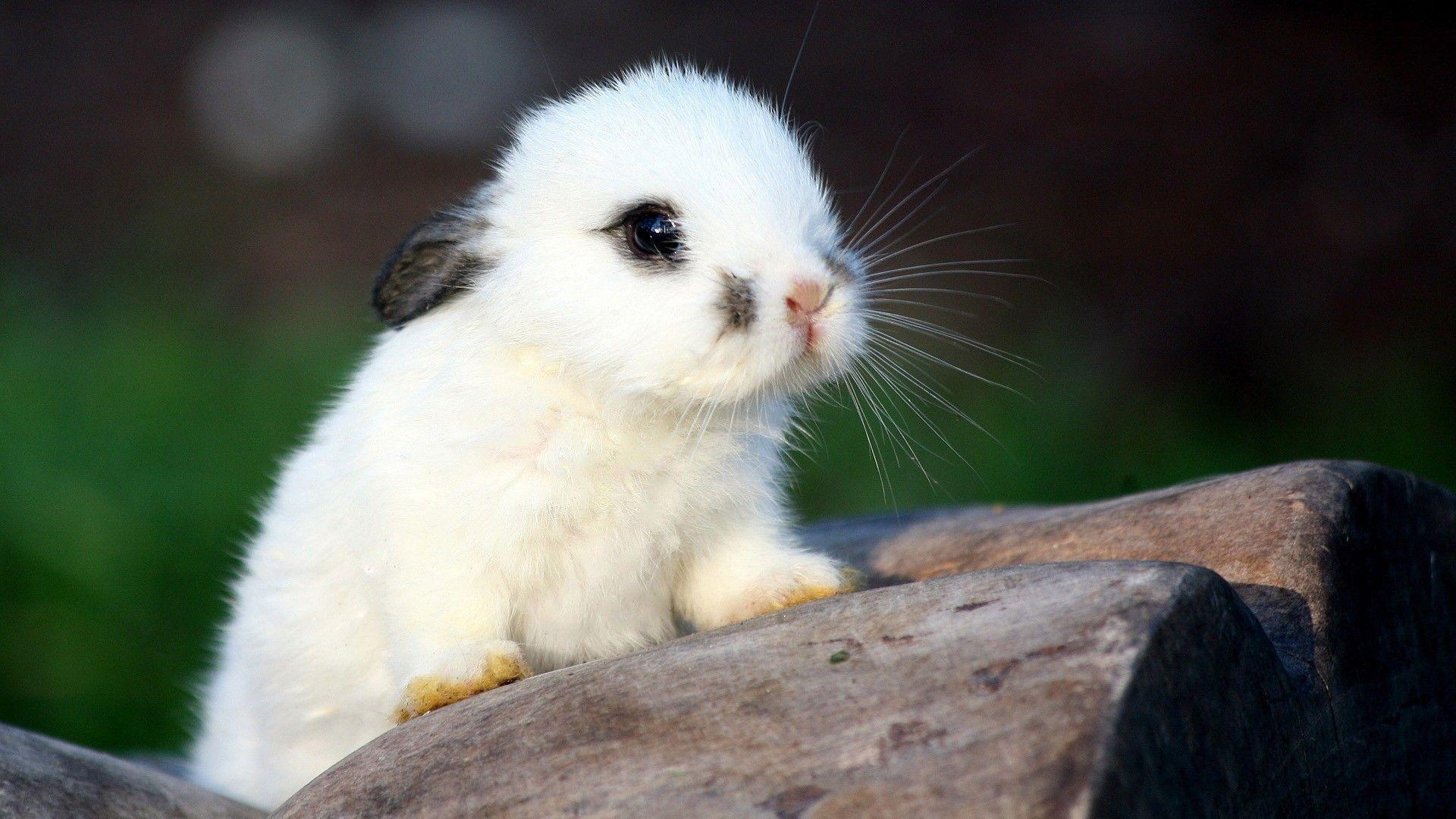 Wallpapers For > Cute Baby Animal Wallpapers Desktop