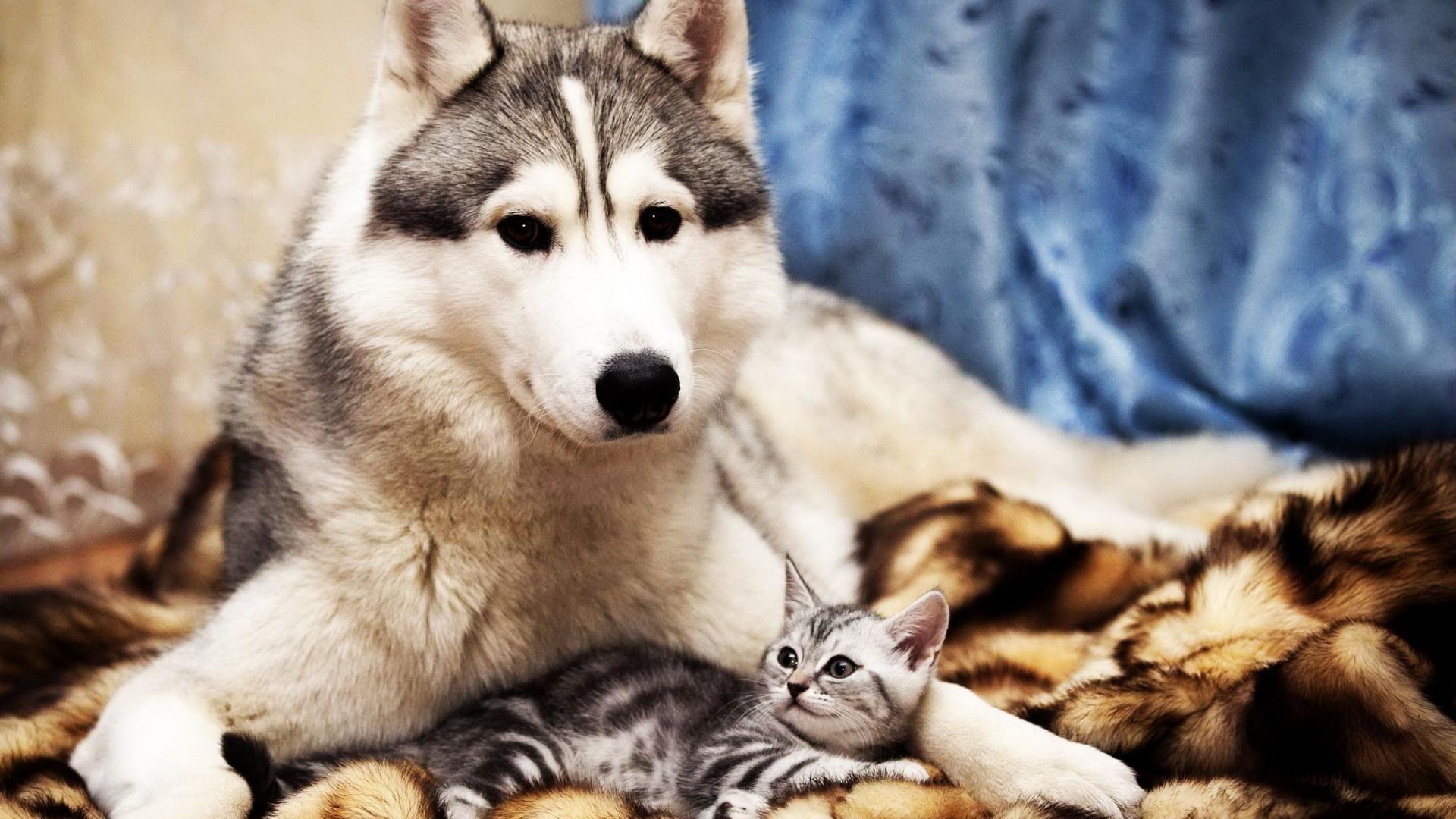 Desktop Backgrounds Cute Animals | Desktop Image