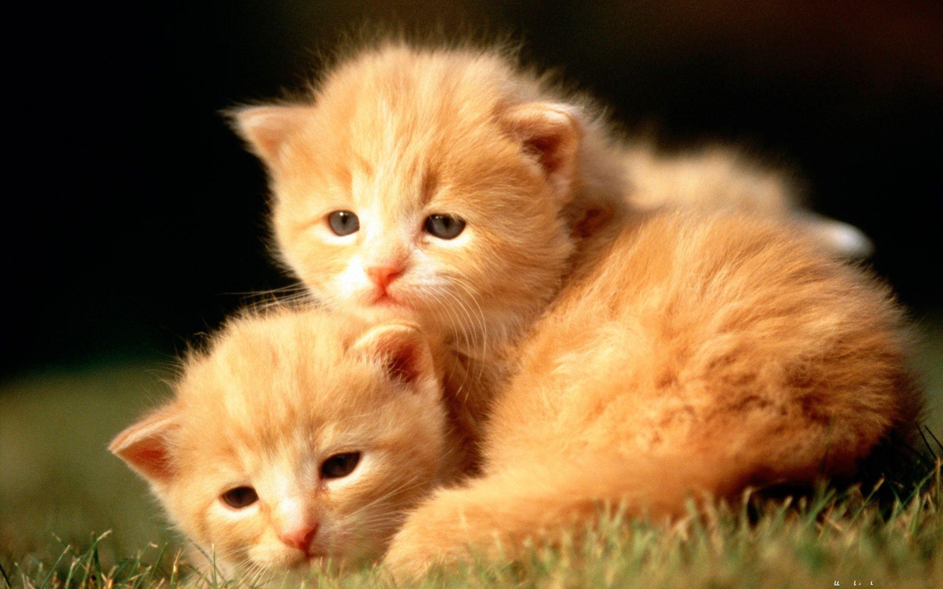 … Cute Baby Animal Cats Desktop Pics. Download