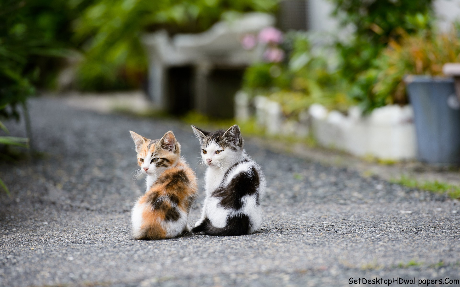 Explore Cute Cats, Adorable Animals, and more! HD Computer Animal Wallpaper  …