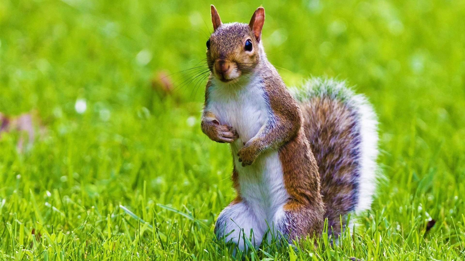 Cute Squirrel Wild Animal Desktop Wallpaper 1920×1080. Cute Animal .