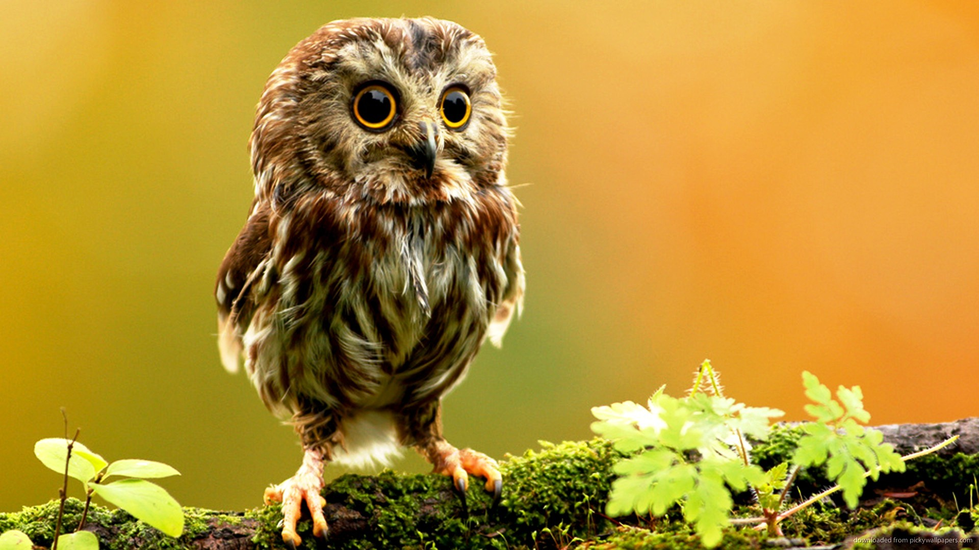 Cute Animal Wallpapers For Desktop Little Owl Creating Attractive Screen  Look With Cute