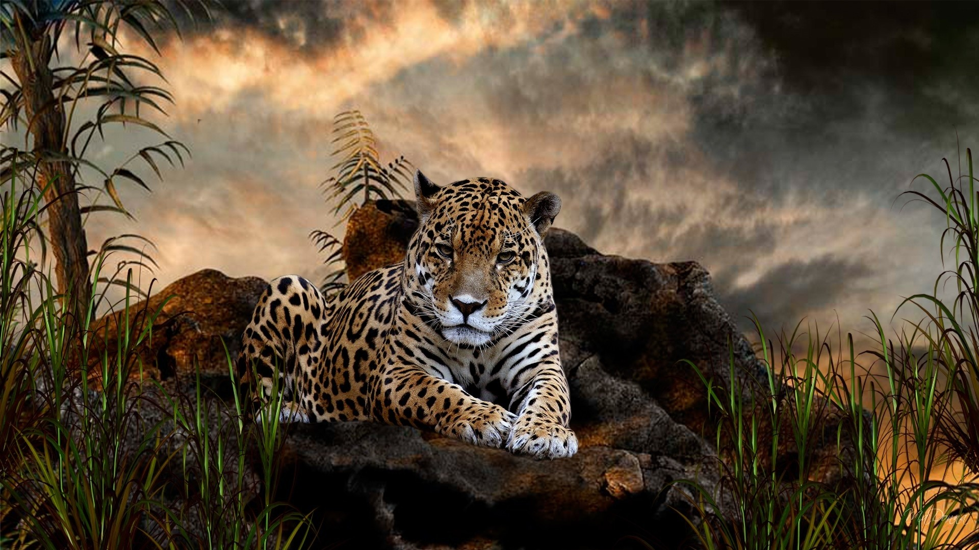 Wild Animal Wallpaper For Pc Widescreen | View HD