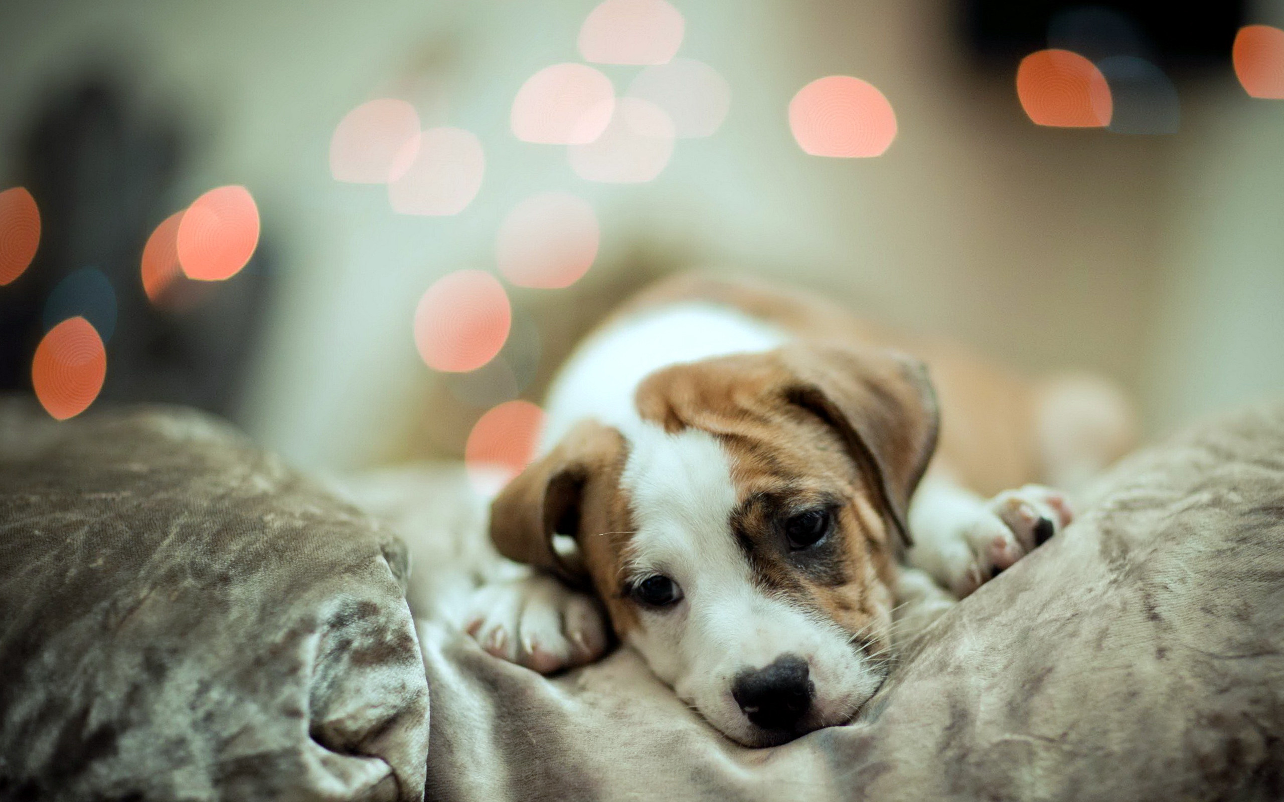 Cute Dog Sleep Wallpaper HD