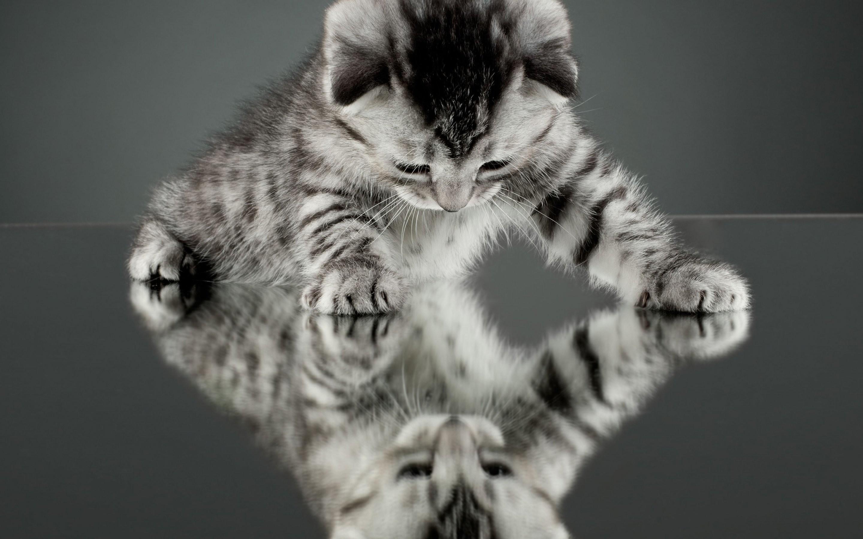 Cute Baby Cats Wallpaper Desktop : Animal Wallpaper – Rakaruan.com