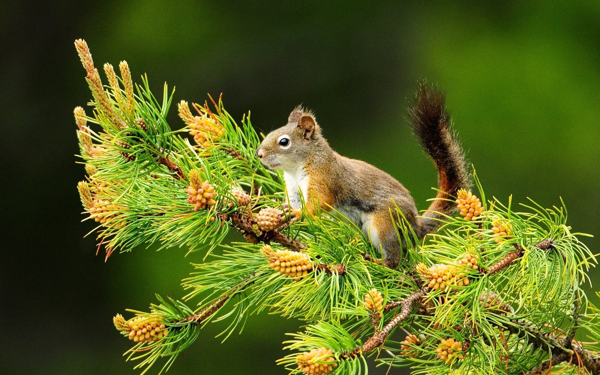 Cute butterfly nice HD wide wallpaper | Squirrel cute animals wallpaper |  HD Wallpapers Rocks