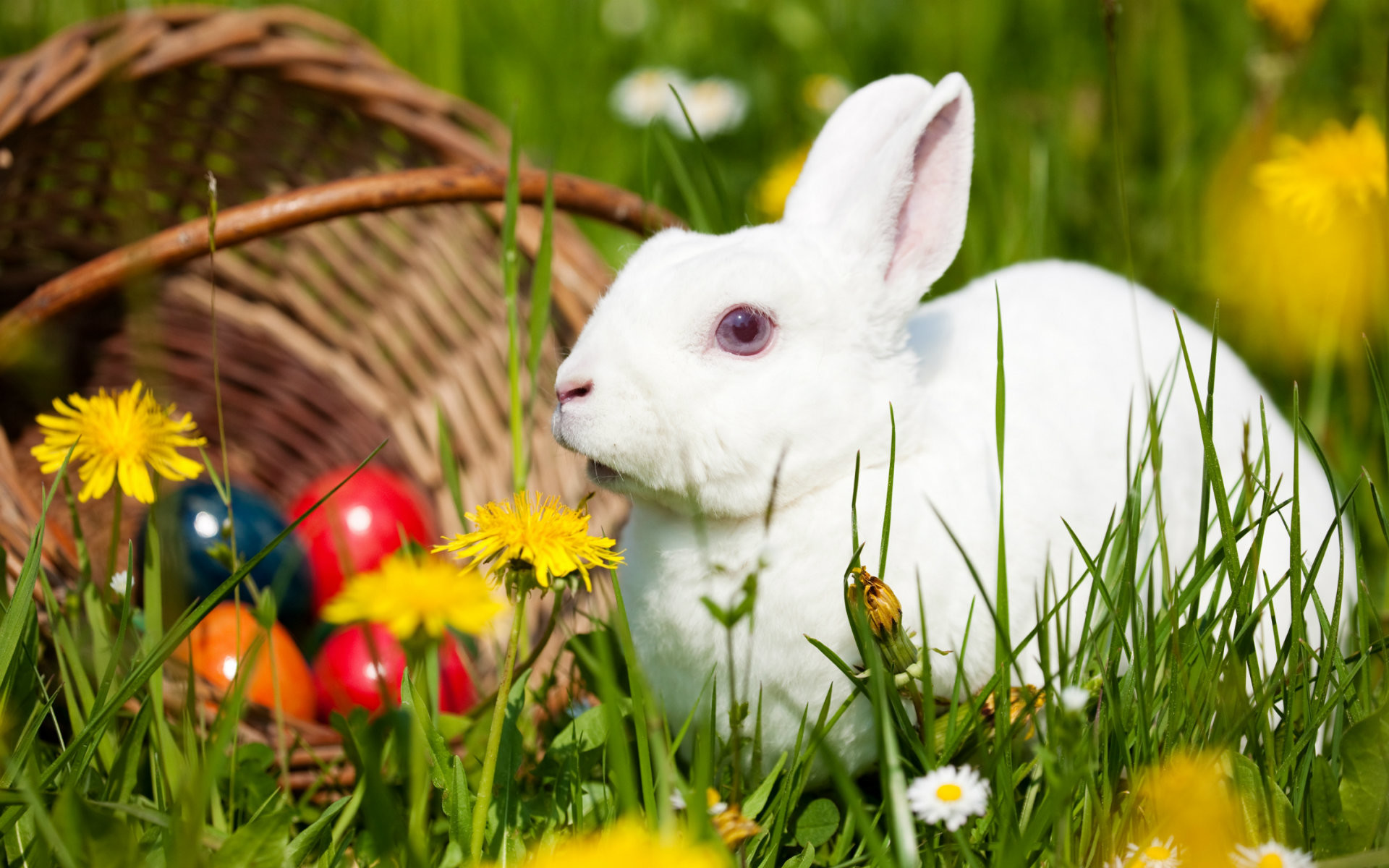 Cute Rabbit Wallpapers For Desktop