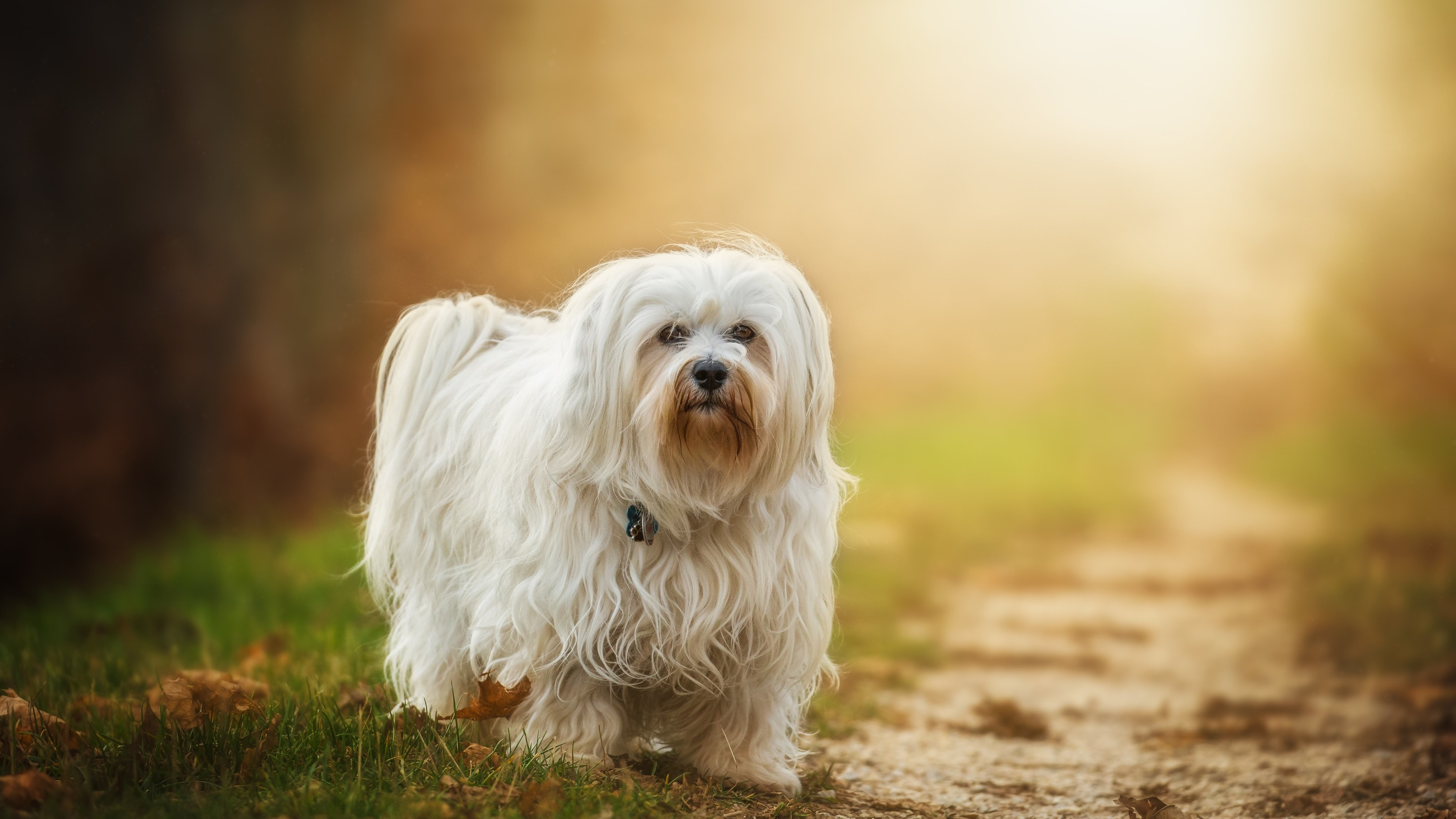 Explore Wallpaper Images Hd, Dog Wallpaper and more!