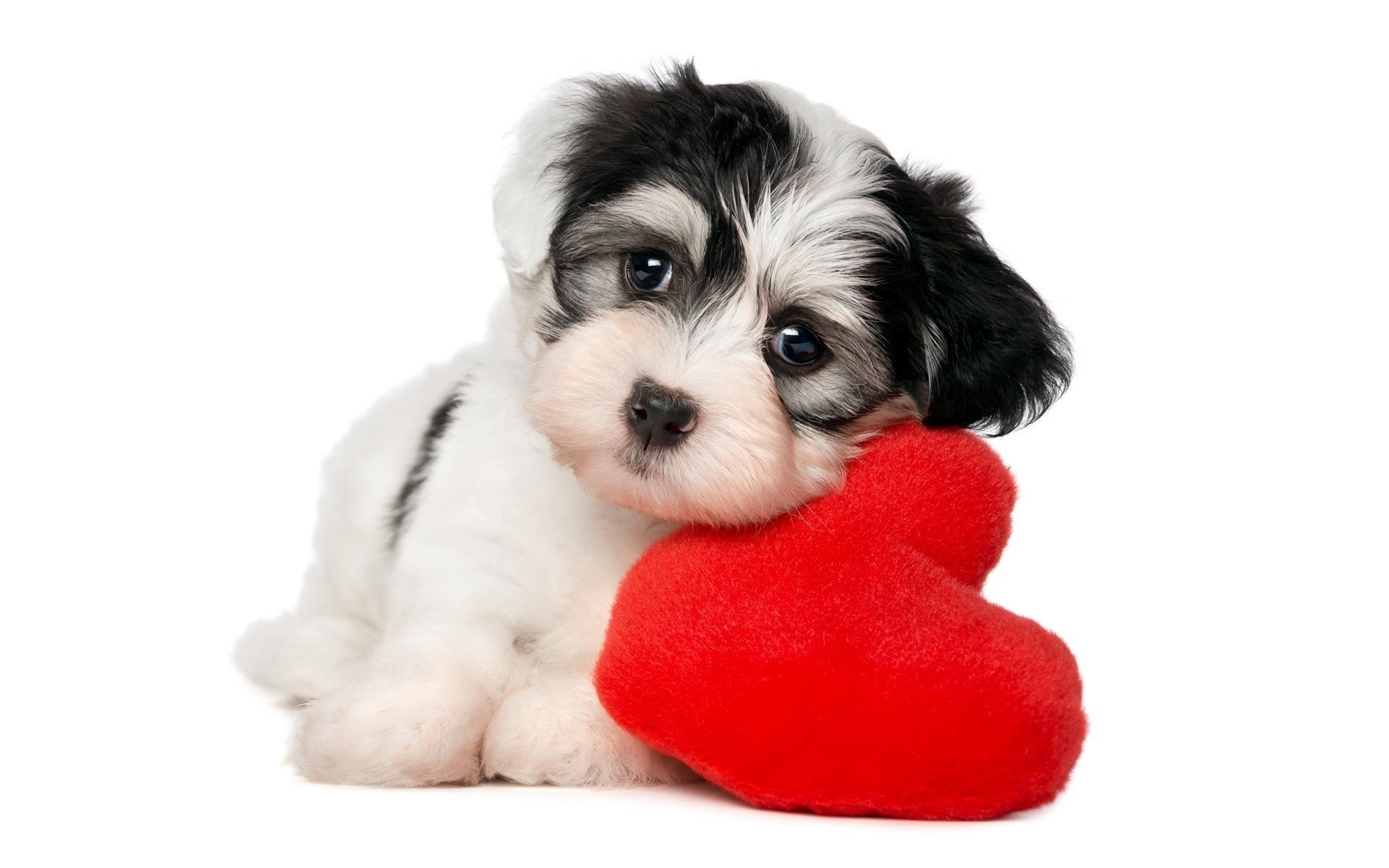 Animal – Puppy Animal Dog Heart Cute Wallpaper