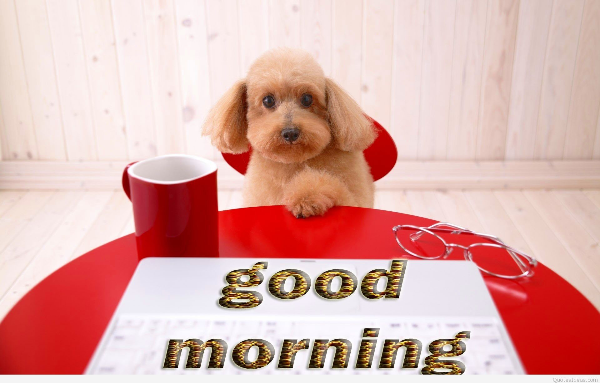 Good-Morning-Tea-cup-dog-Wallpapers