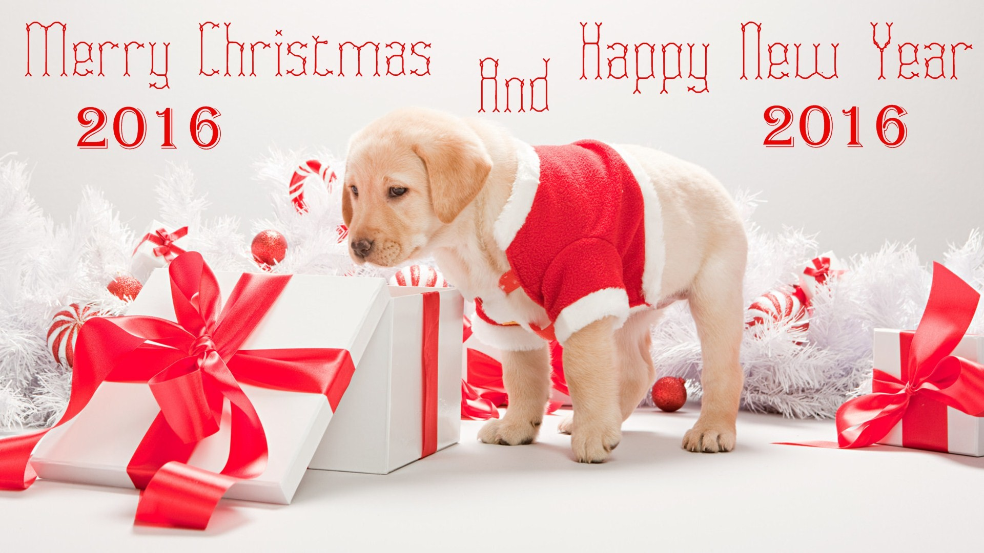 Merry Christmas And Happy New Year 2016 Labrador Puppy Looking Gifts