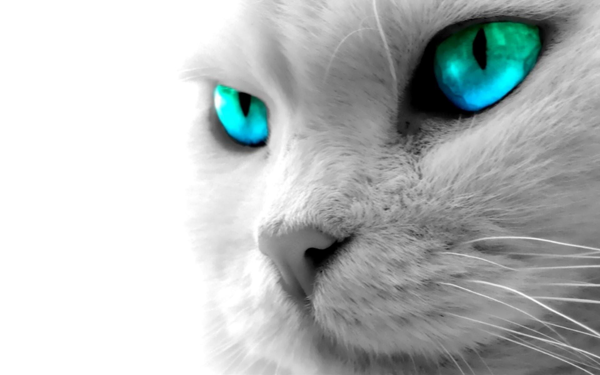 HD Wallpaper | Background ID:71068. Animal Cat