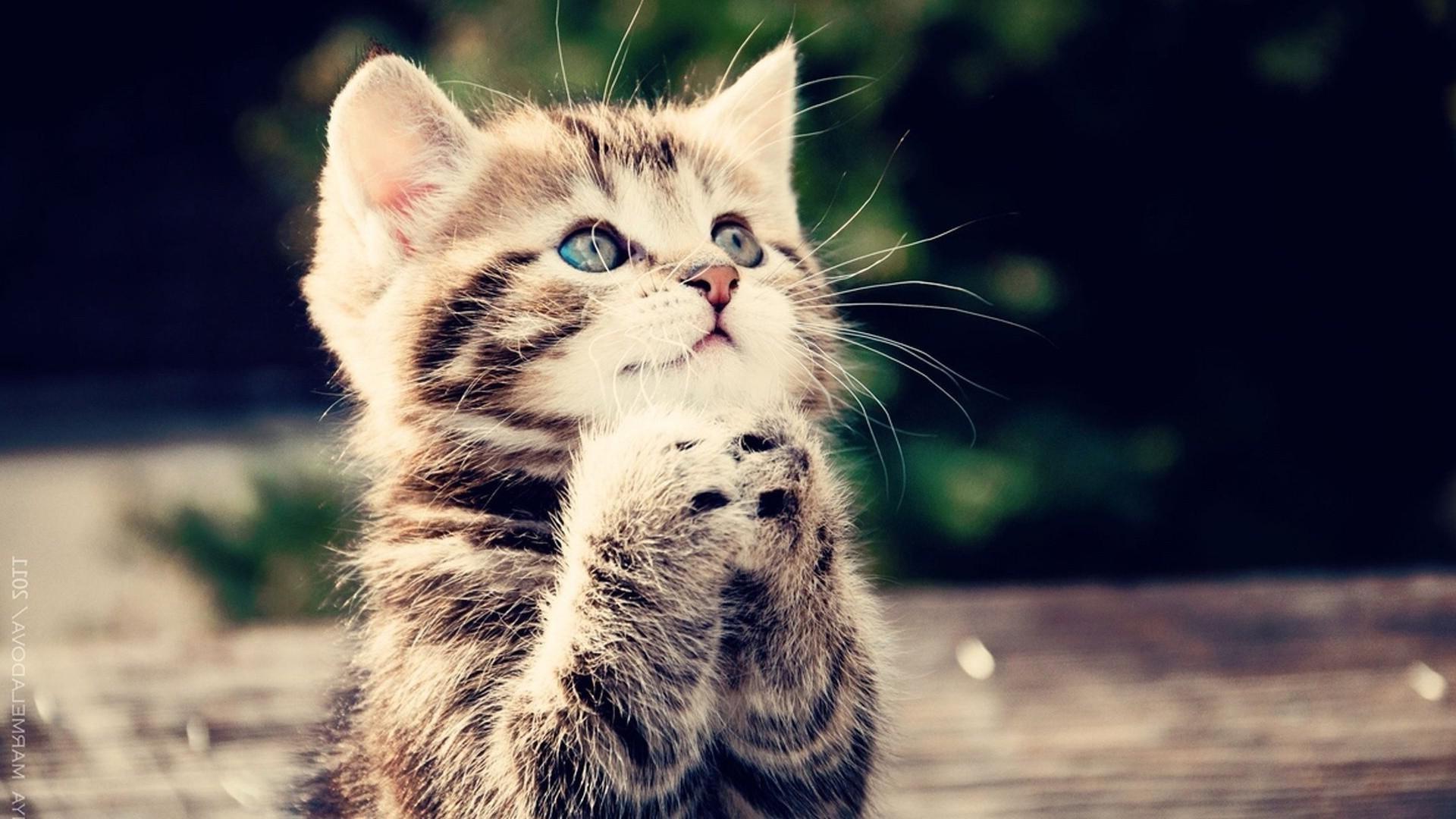 Cute Cat Background