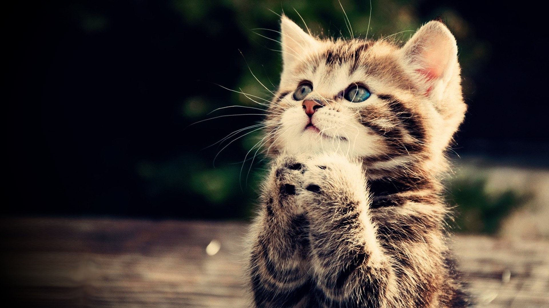 … free cat wallpapers mobile long wallpapers …