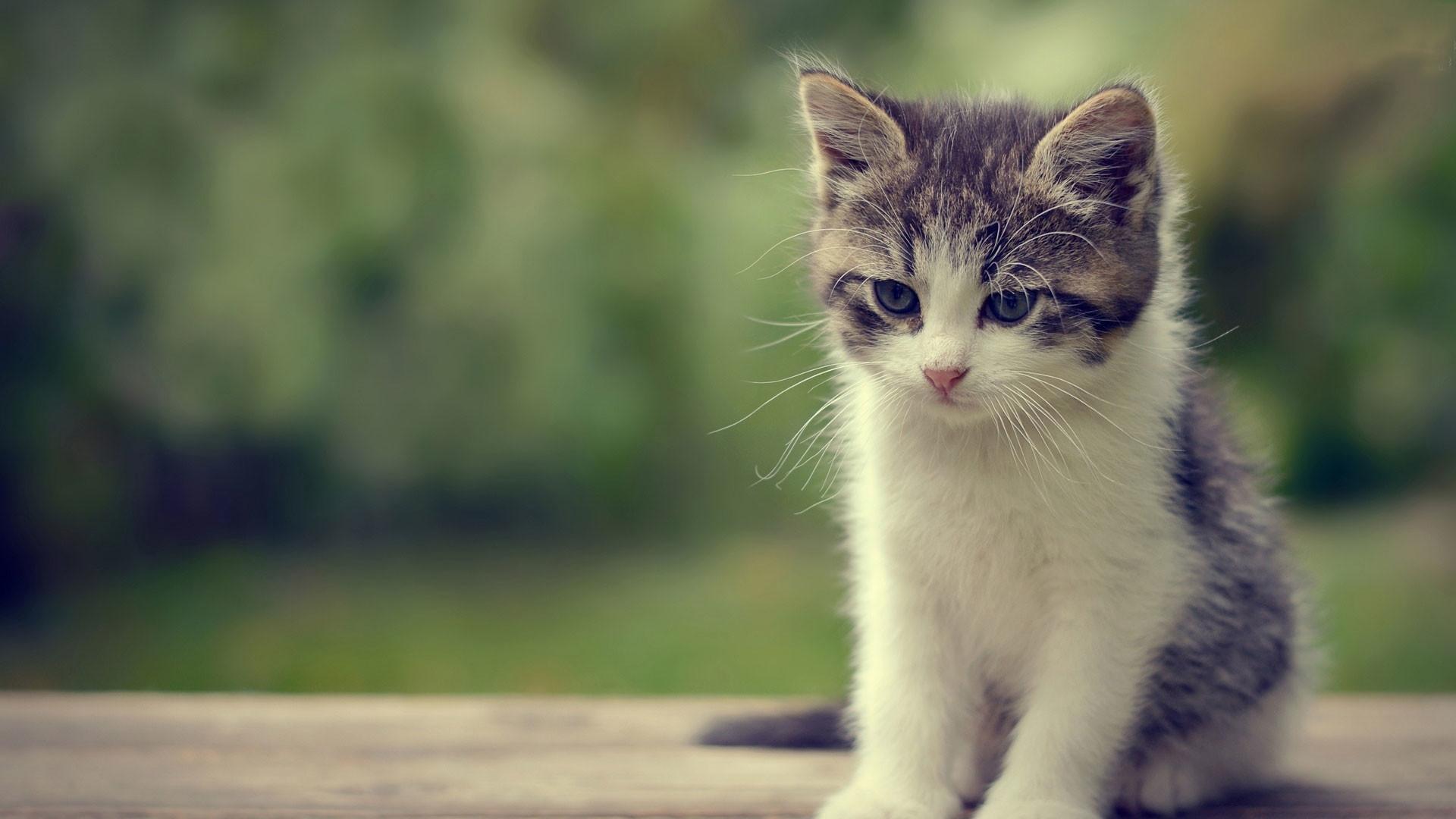hd pics photos cute cat attractive kitten nice beautiful hd quality desktop  background wallpaper
