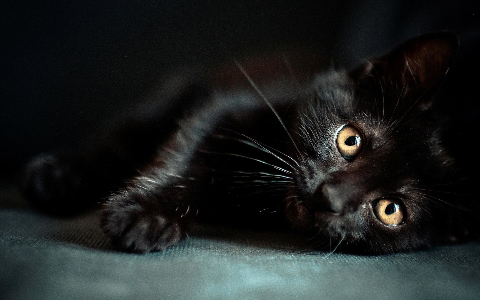 … Black Cat Wallpaper Collection (4)