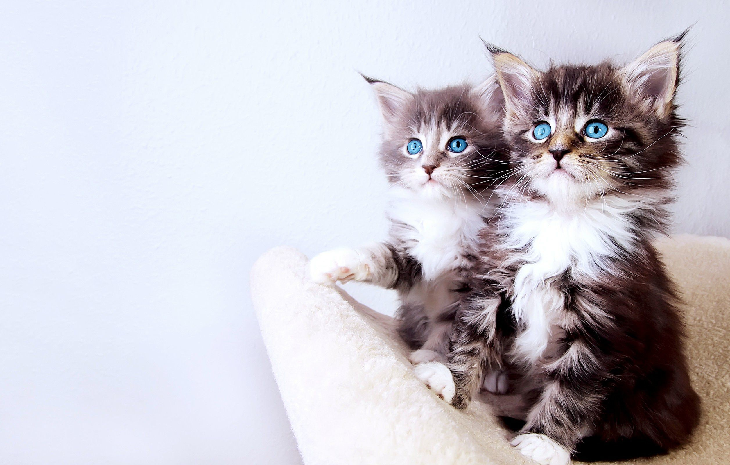 baby cat desktop wallpaper