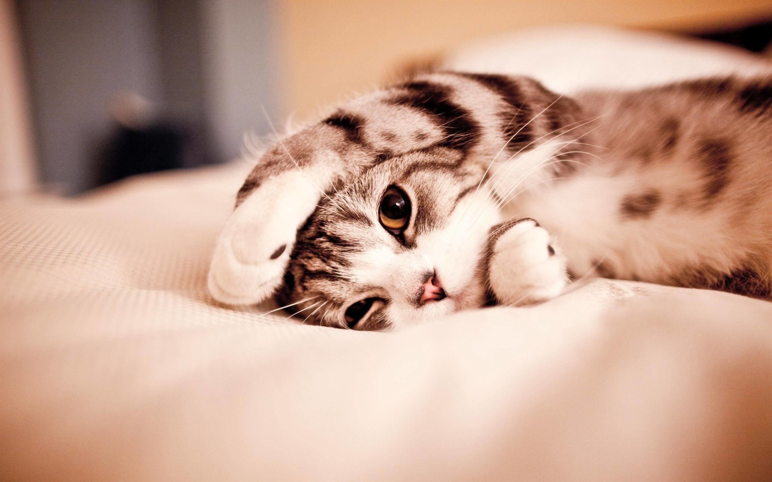 Cute Cat Wallpaper HD Background Do – Cats Wallpaper