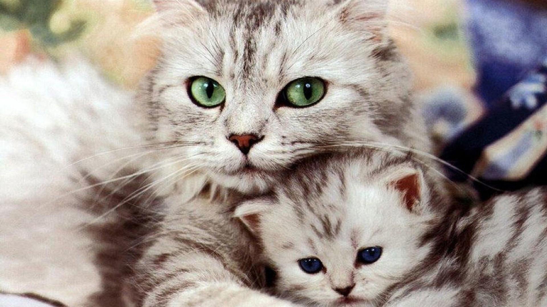 hd pics photos cute cat with kitten beautiful hd quality desktop background  wallpaper