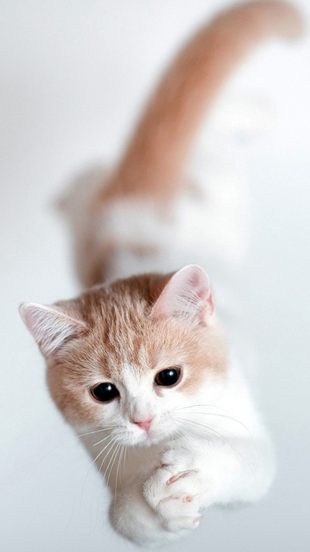 Cute Cats with Galaxy Background. Wallpaper …