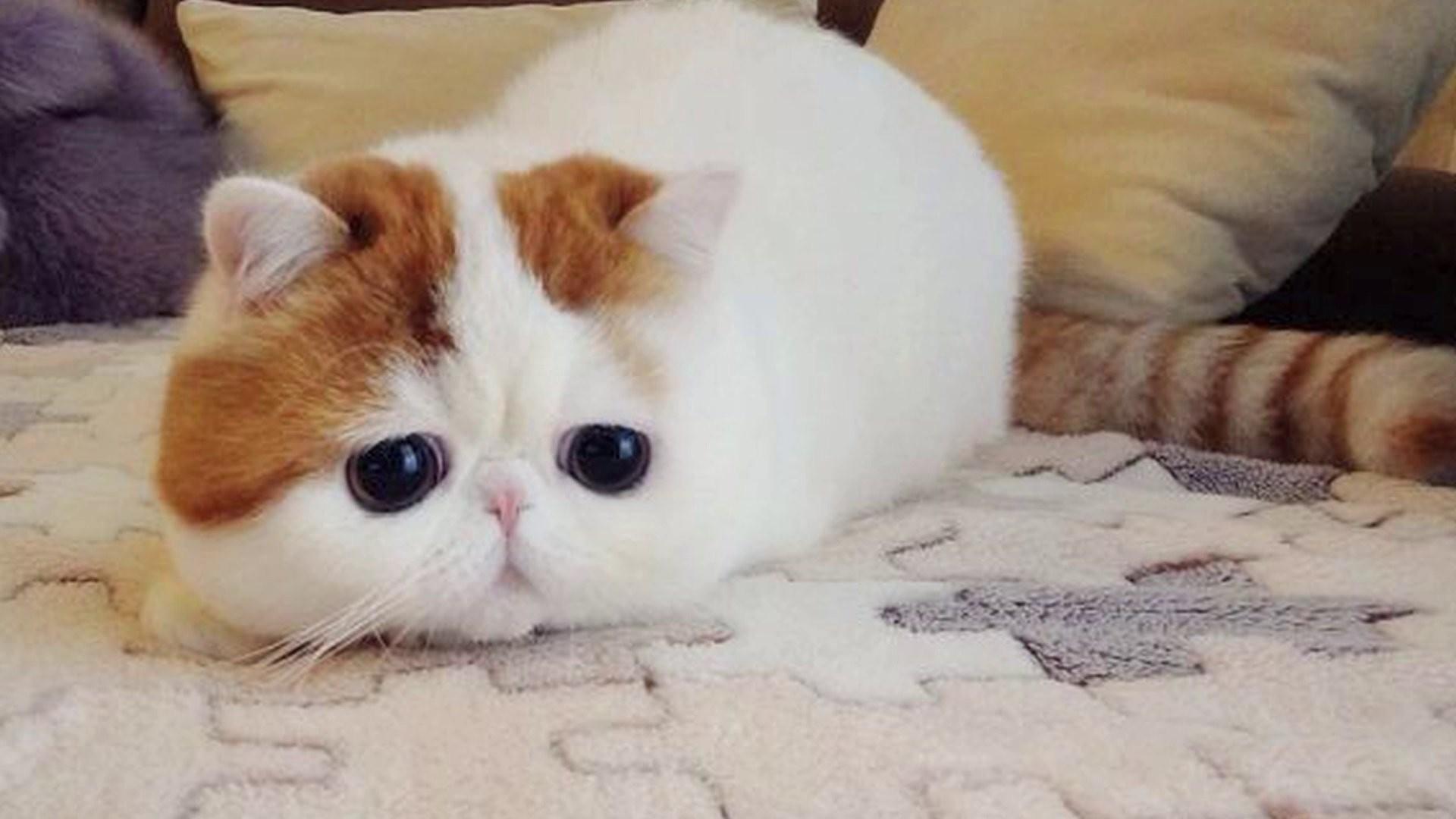 Tags: Cat