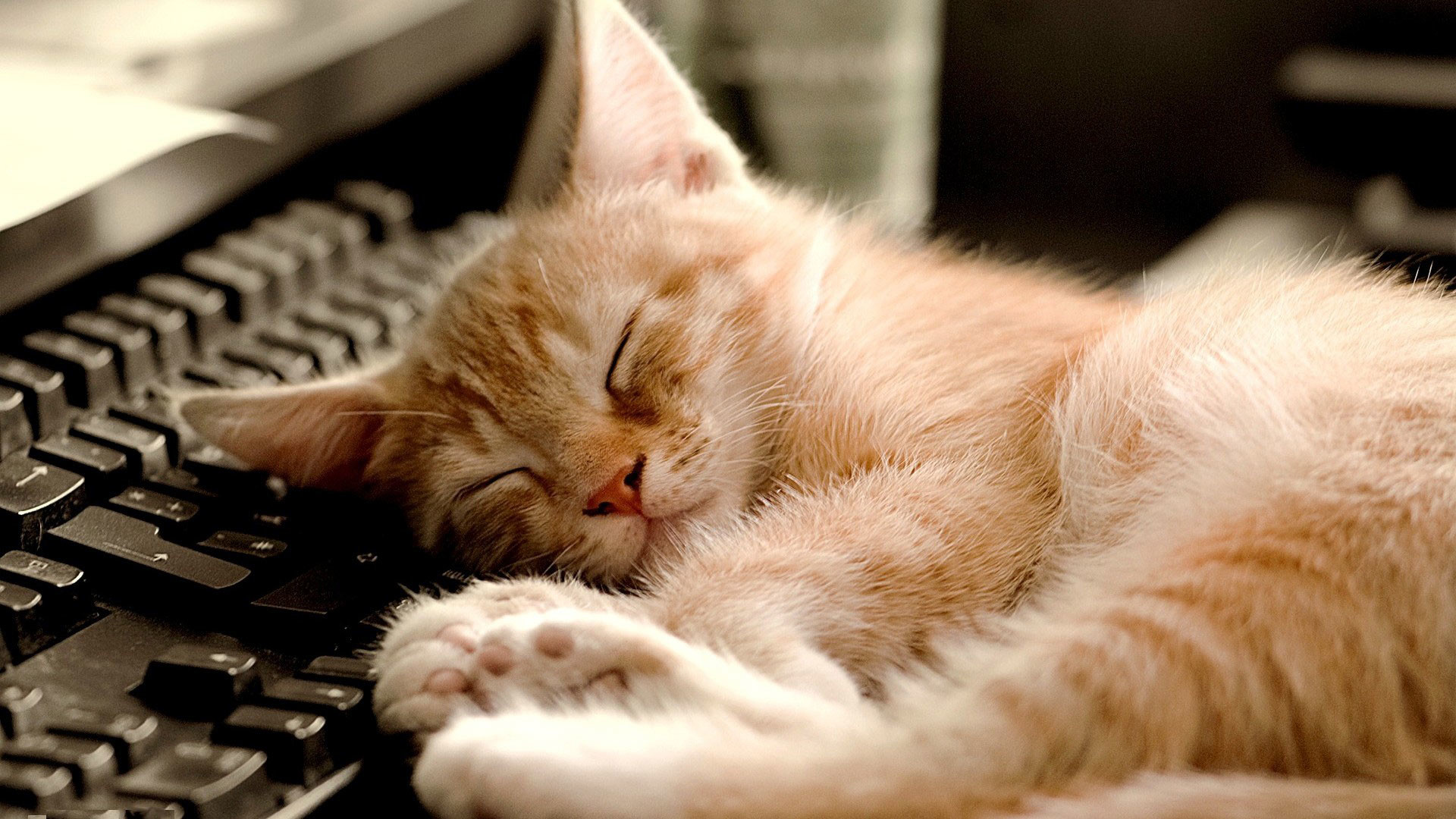 hd pics photos cute cat sleeping computer keyboard hd quality desktop  background wallpaper