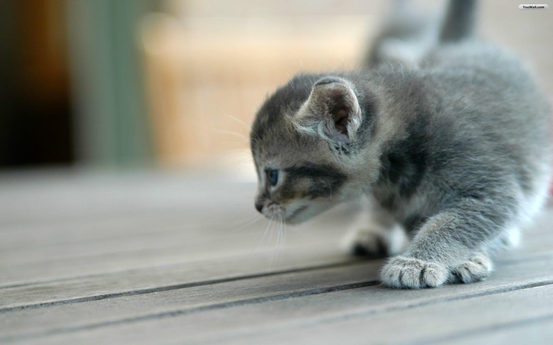 Cute Cat Wallpaper Background #60012 – Ehiyo.