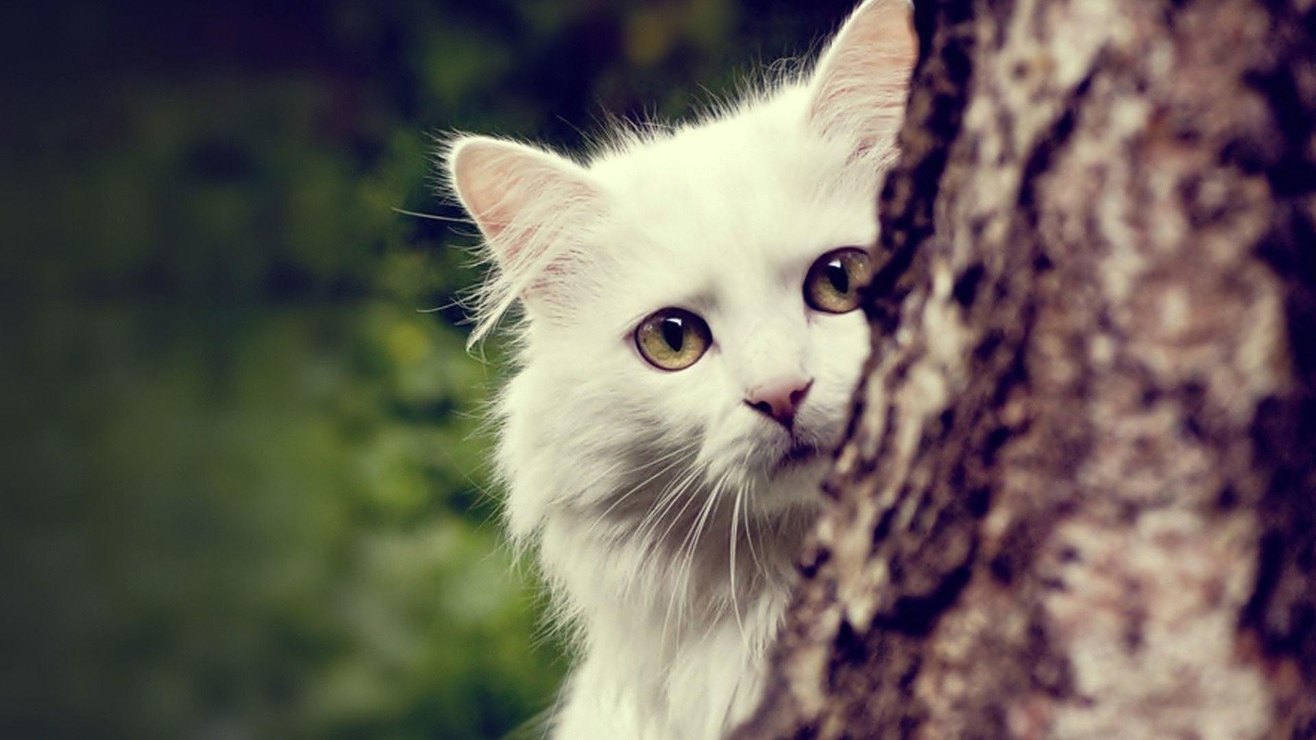 hd pics photos very cute white cat tree hd quality desktop background  wallpaper