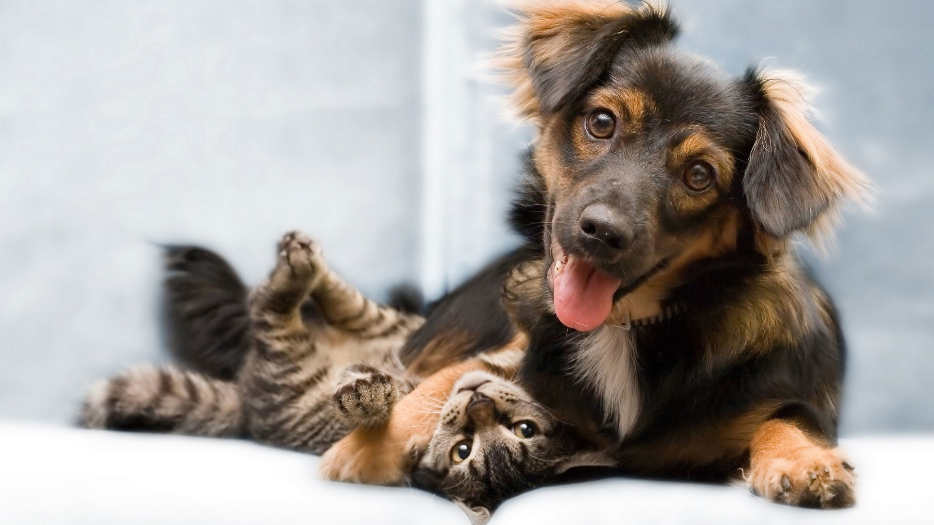 hd pics photos best dog and cat friends awesome hd quality desktop  background wallpaper