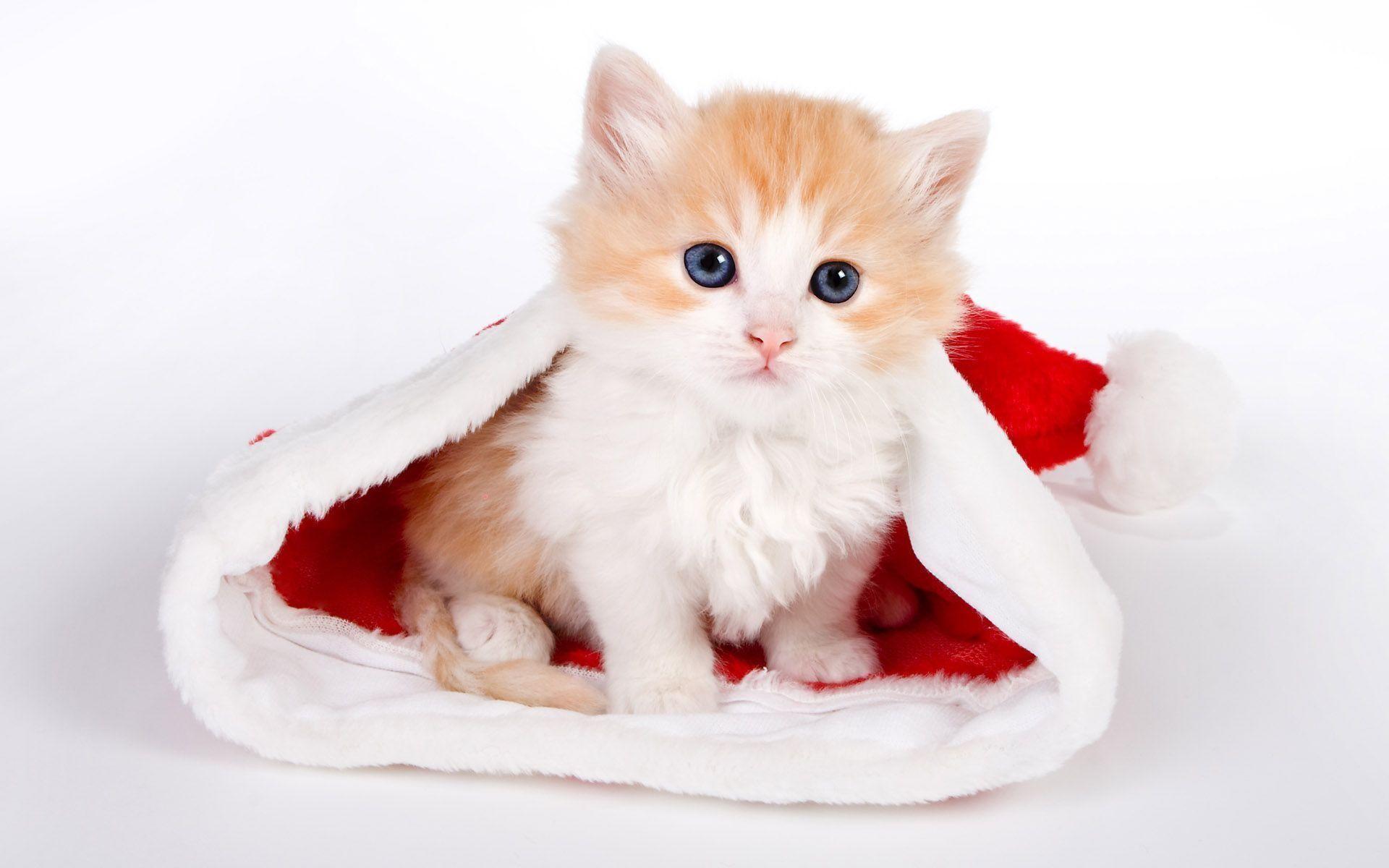 Cute Cat Background HD Wallpaper Desktop Backgrounds Free