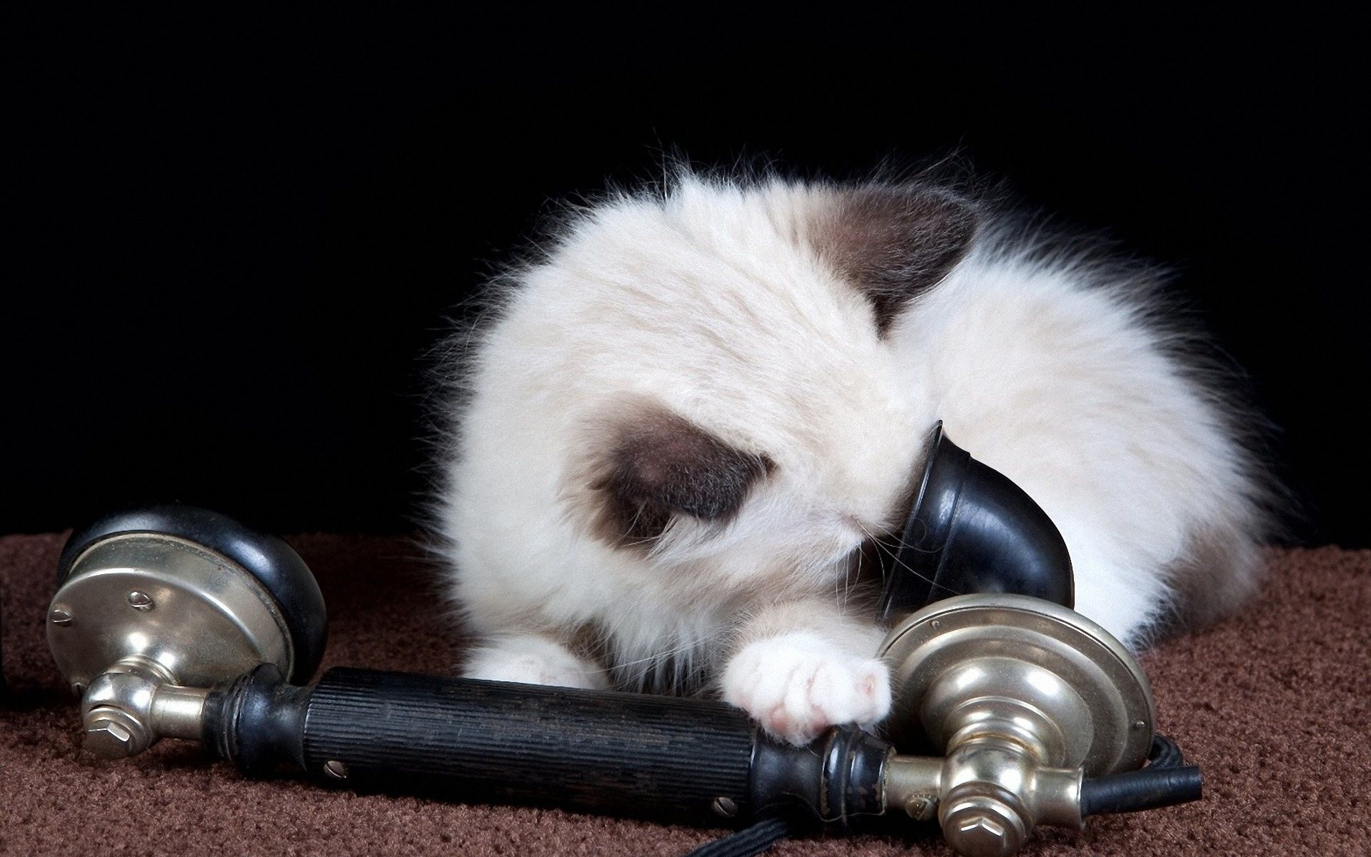 Funny Cat Playing 48 Background Wallpaper