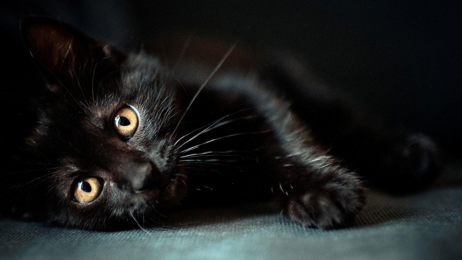 hd pics photos cute pure full black cat attractive stunning hd quality desktop  background wallpaper