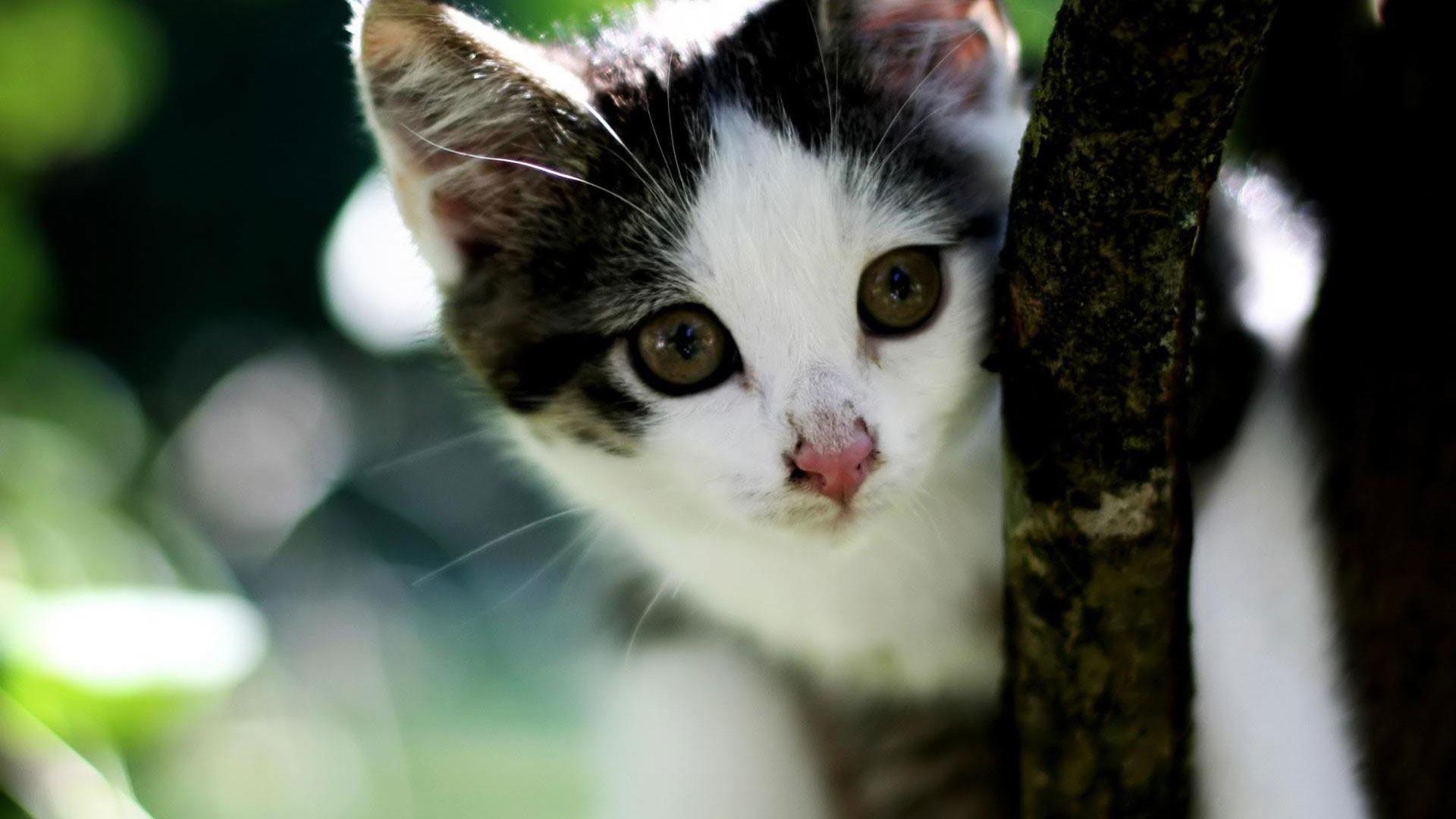 hd pics photos cute kitten cat tree hd quality desktop background wallpaper
