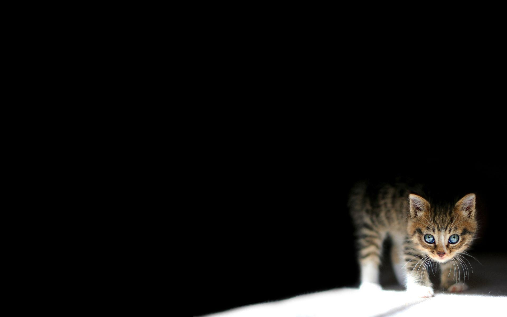 Cute cat Background Wallpapers Default resolution. Download Cute .