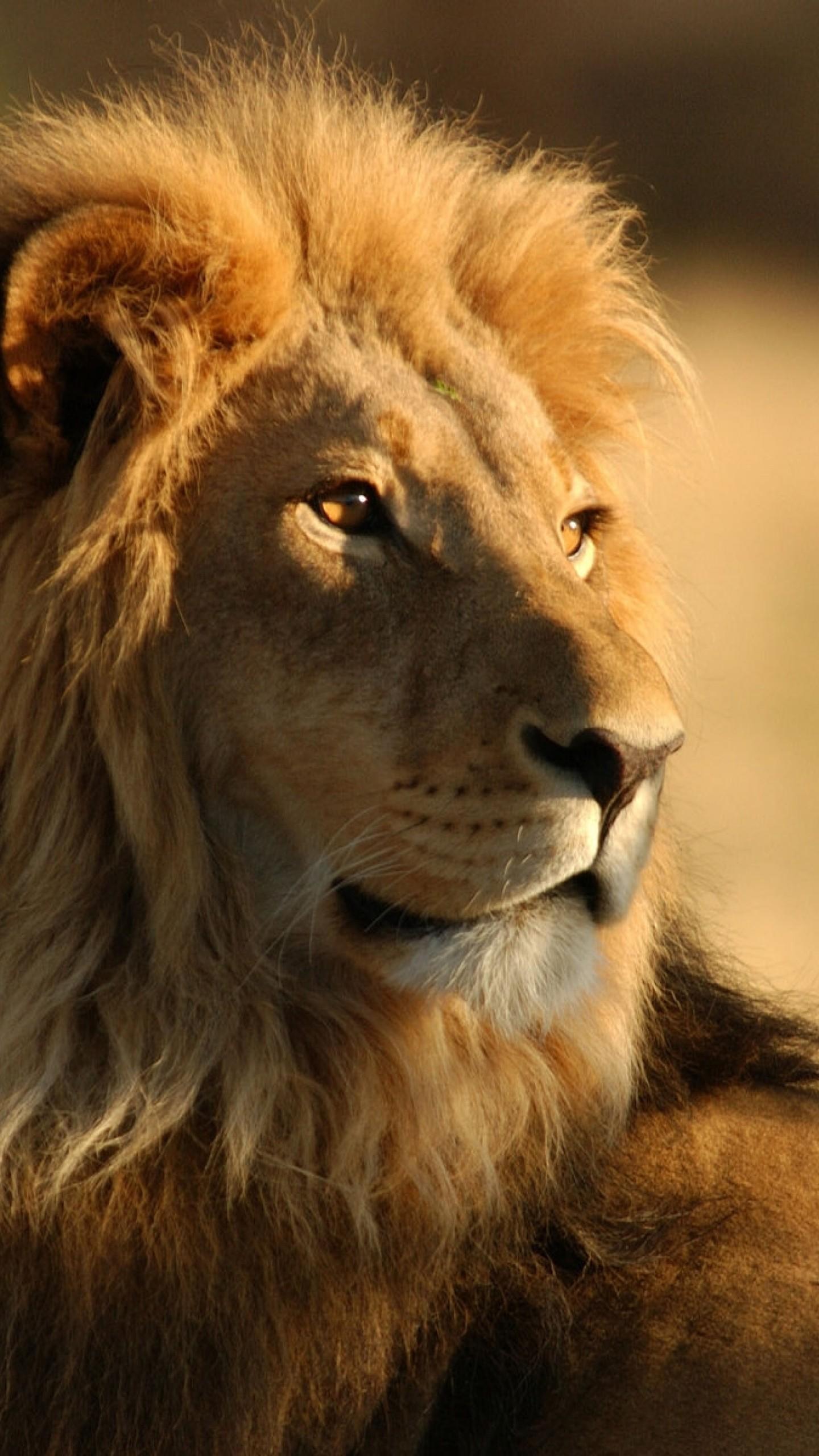 Preview wallpaper lion, face, mane, big cat, predator 1440×2560