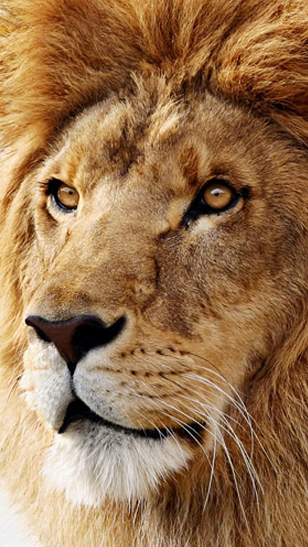 iPhone 6 plus Mac os x lion Wallpapers