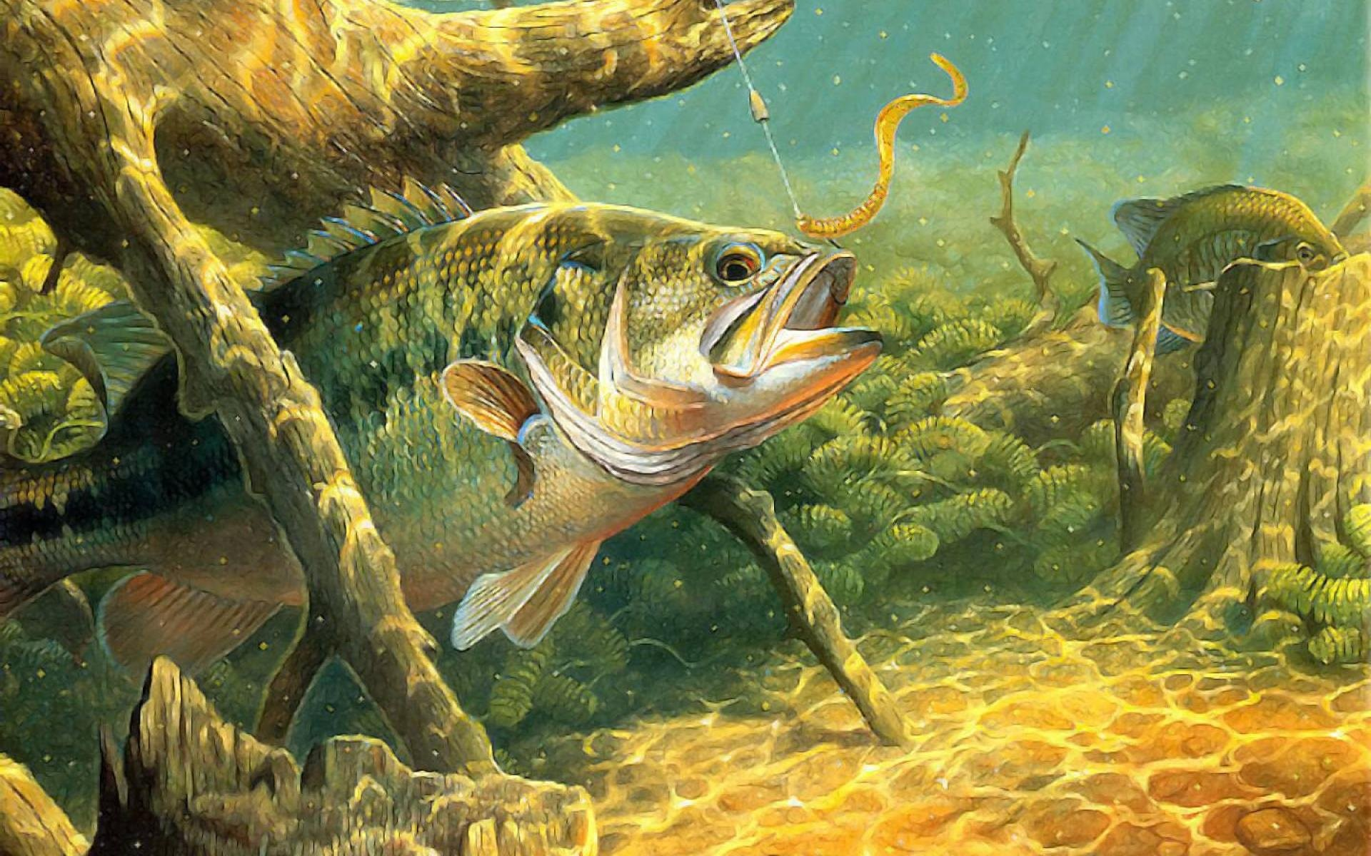 River fish in water – photo#14
