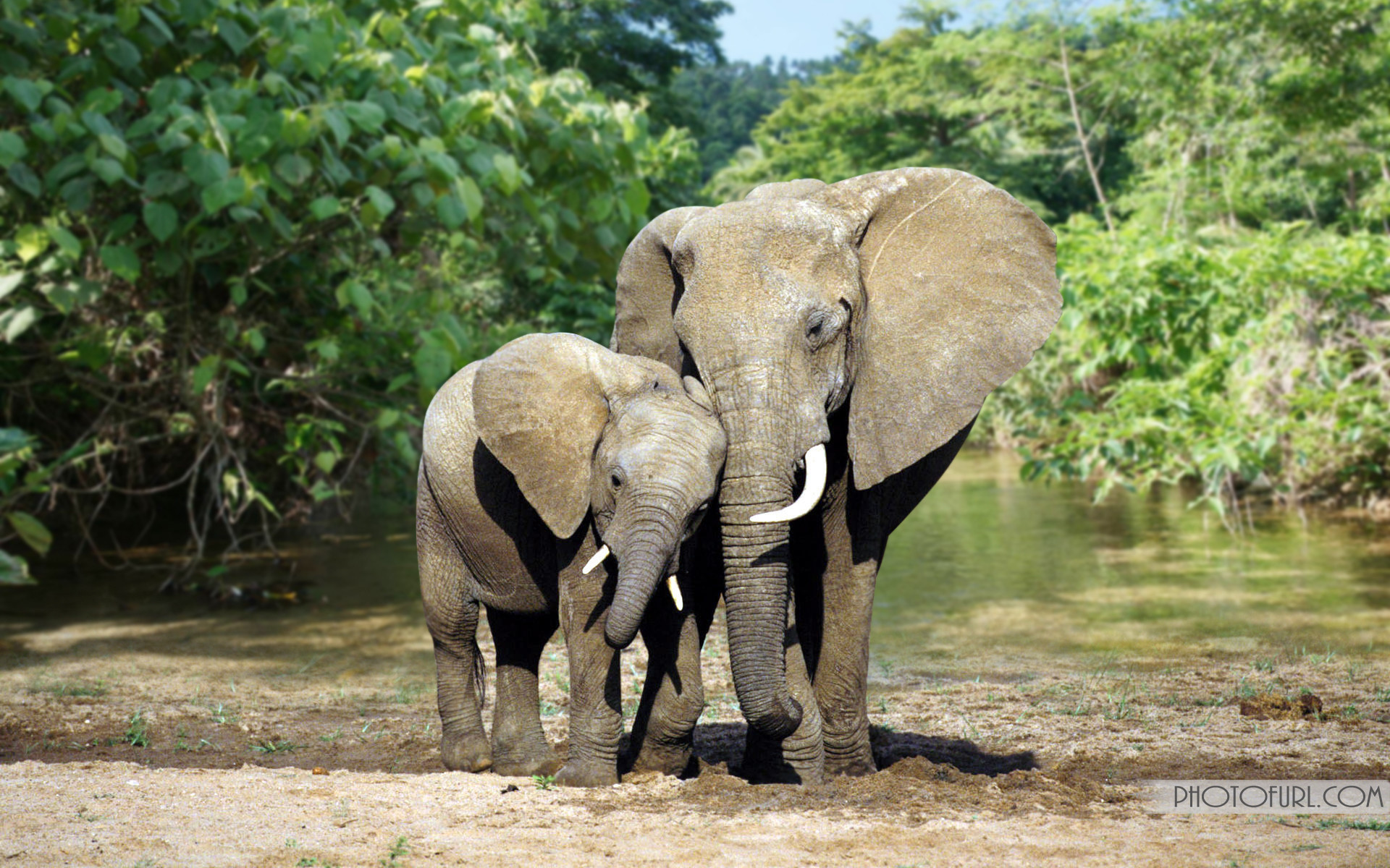 Wild Animals Wallpapers | Forest Animals Wallpapers Free Download