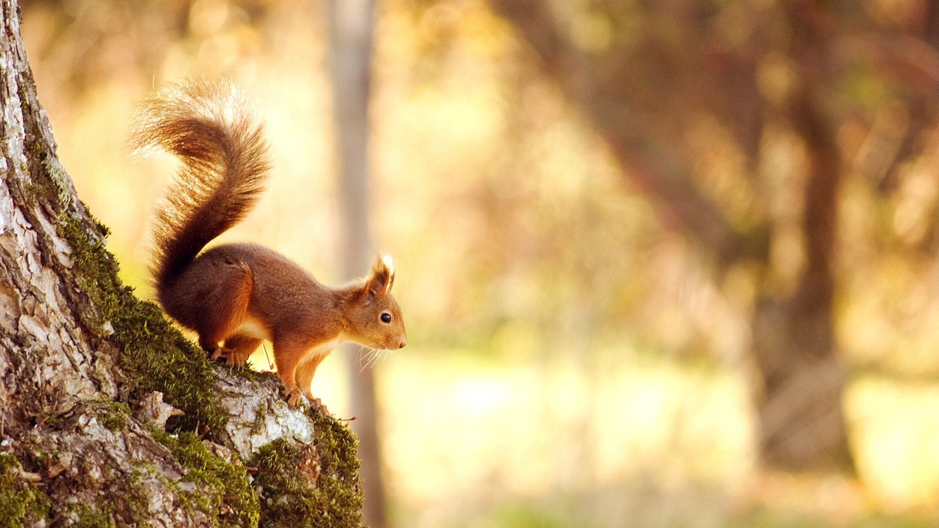 Animal nature cute forest squirrel wallpaper | | 696254 |  WallpaperUP