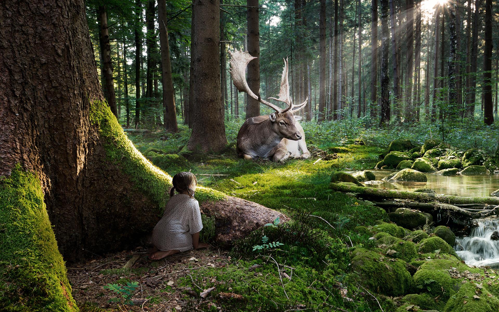 Fairy Tale Wallpaper | Fairytale Forest Enchanting Hd wallpaper – HD  Wallpapers