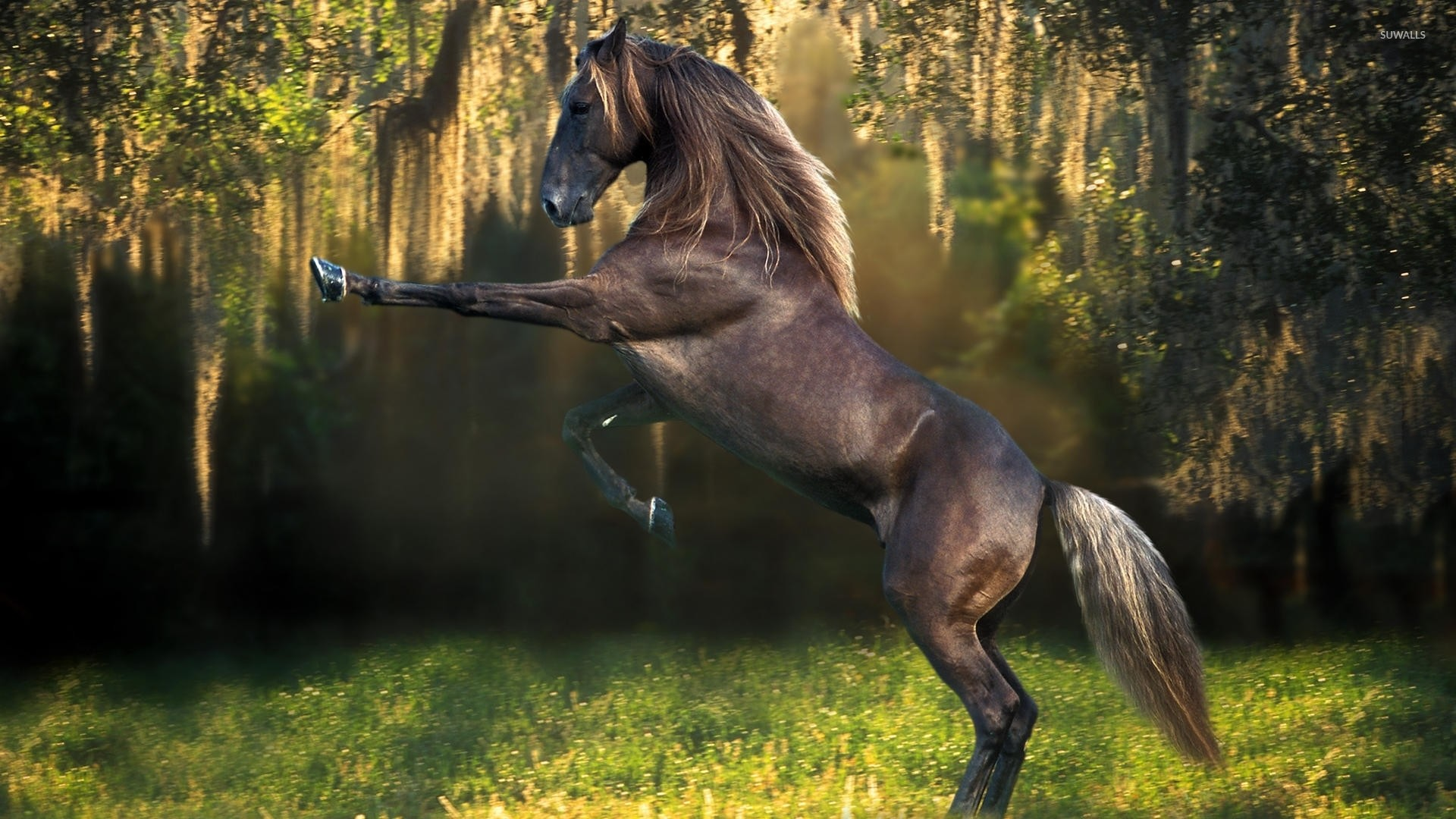 Prancing brown horse in the forest wallpaper jpg